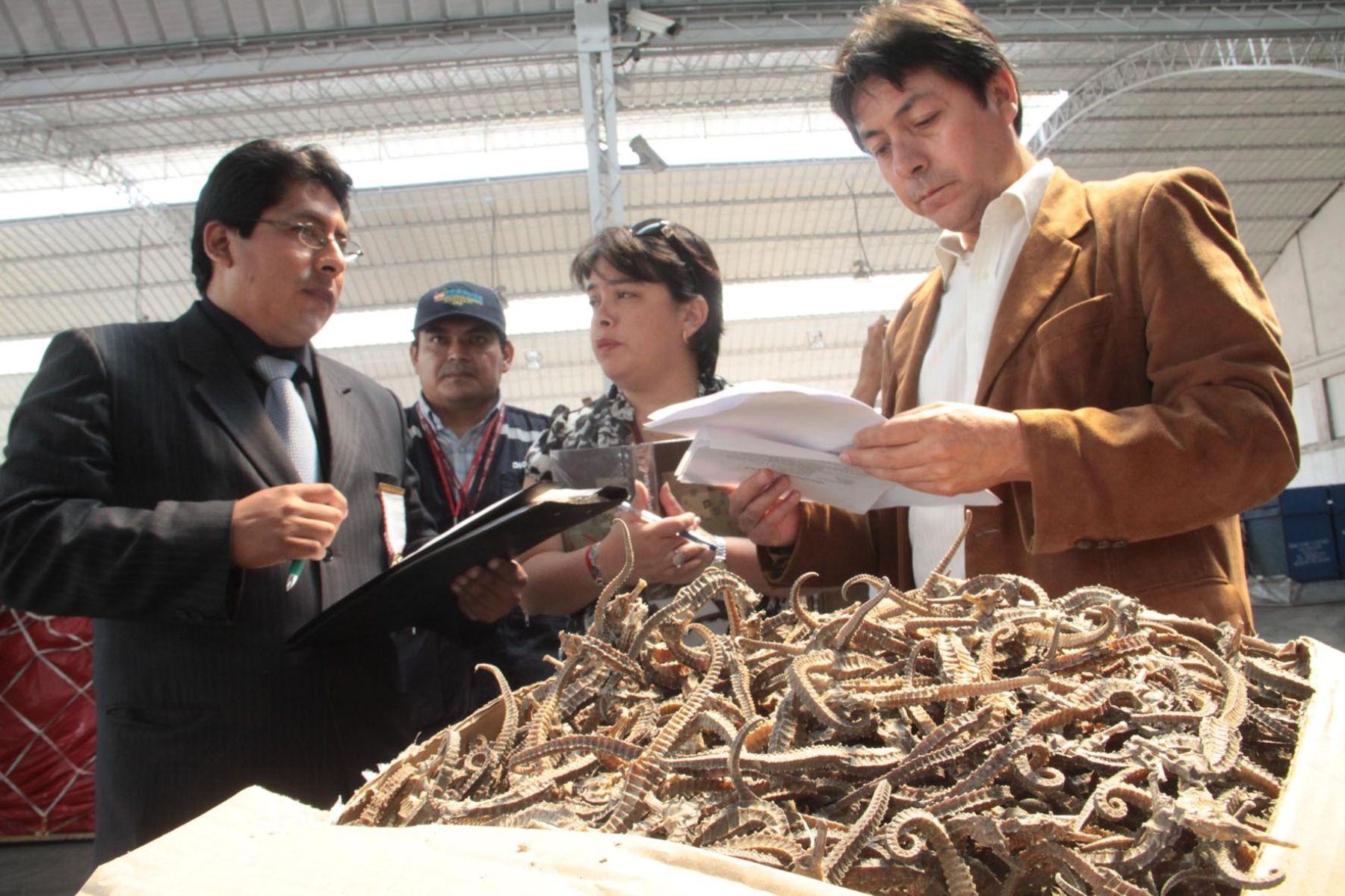 Funcionarios del Ministerio de la Producción y de la Sunat decomisaron un cargamento de más de 25,000 caballitos de mar. Foto: ANDINA(Difusión.