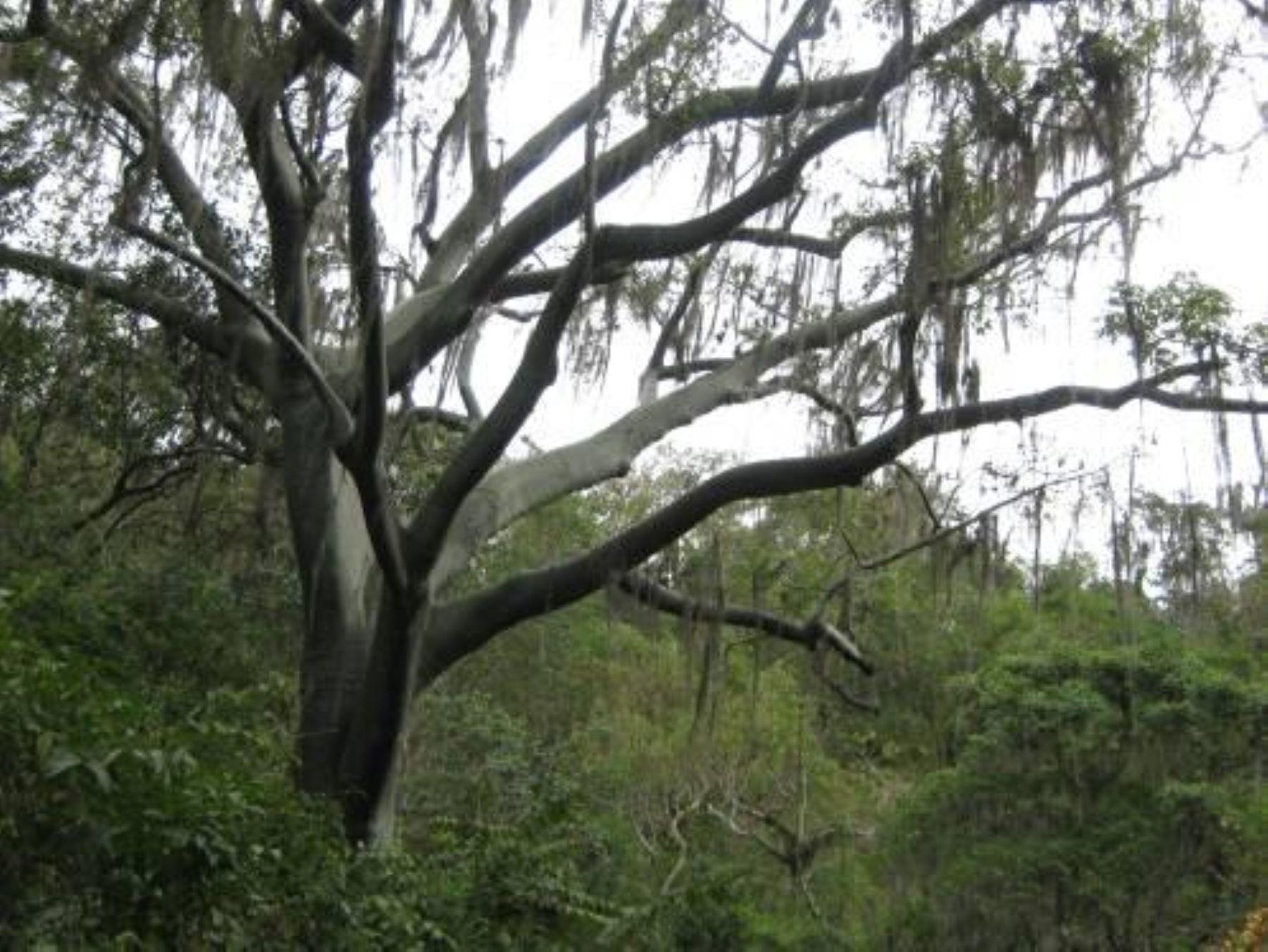 Área de Conservación Regional Angostura Faical, en Tumbes. Foto: Sernanp.