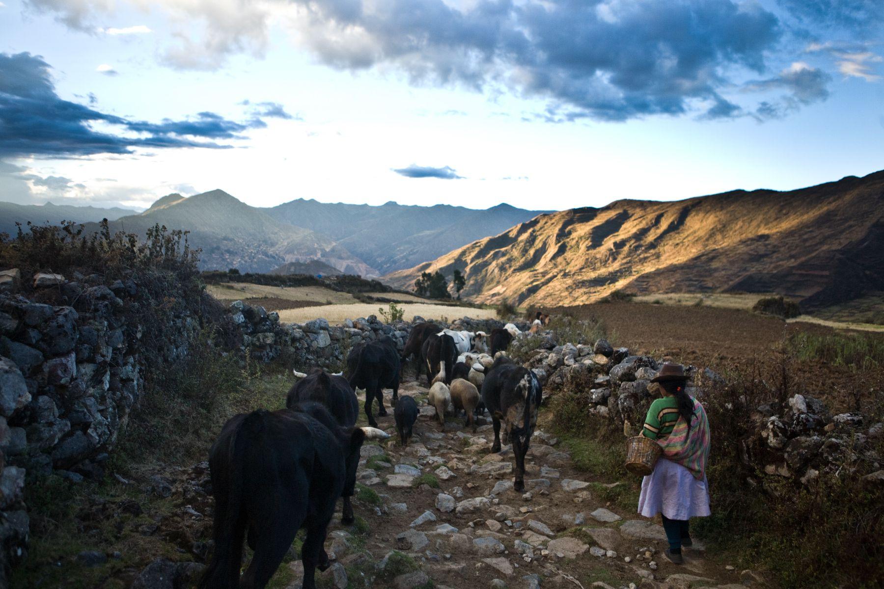 Inca road system Qhapaq Ñan. Photo: ANDINA/INC