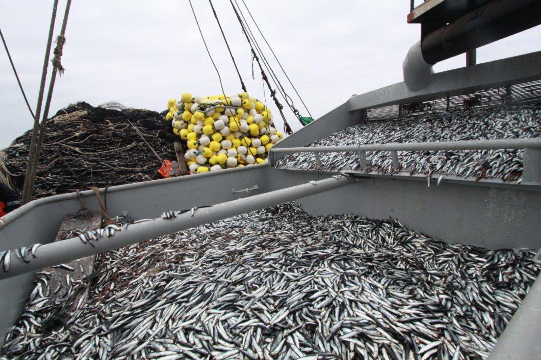 Resultado de imagen para pesca anchoveta lima perú