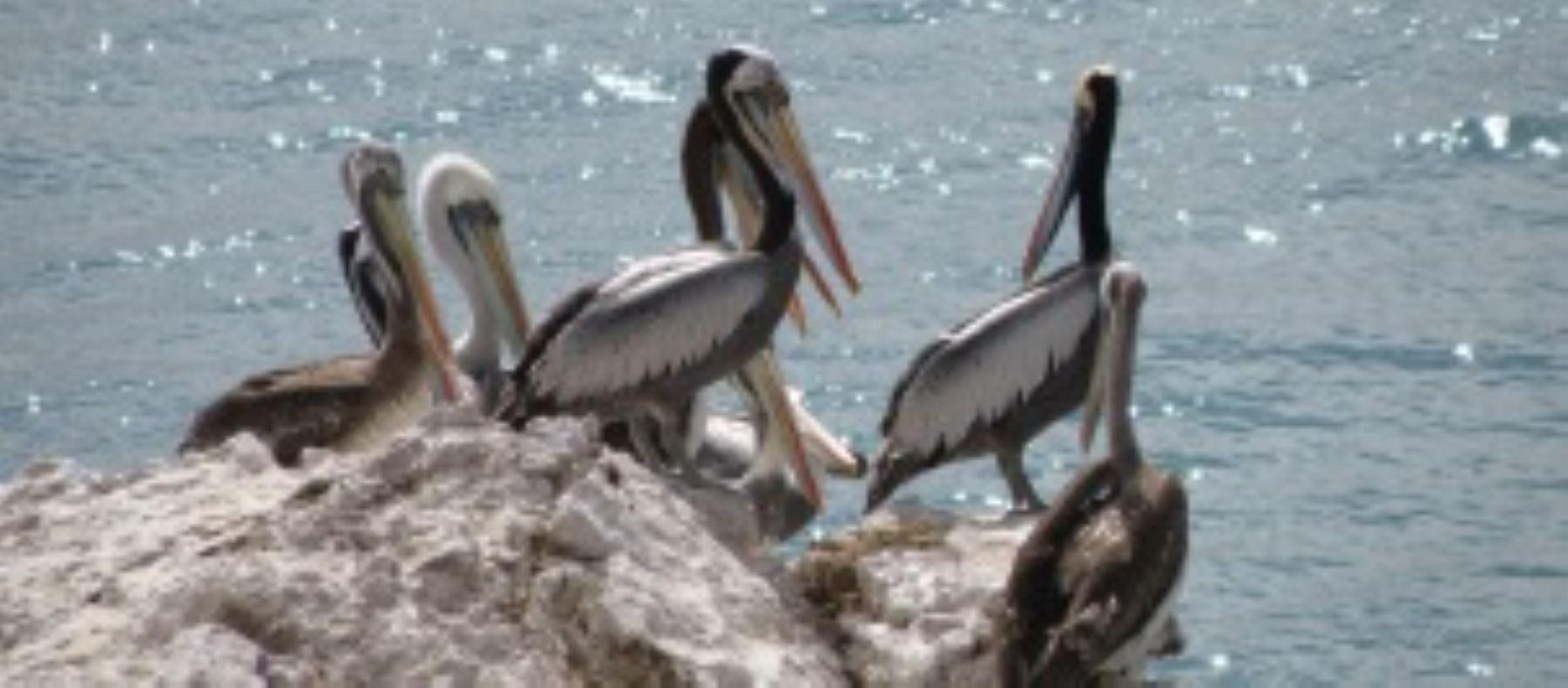 La Reserva Nacional San Fernando es una de las áreas naturales protegidas por el Estado peruano menos conocidas, pero que destaca por su privilegiada ubicación y amplia diversidad biológica que la ubican como la segunda más importante de la Costa después de la Reserva Nacional de Paracas.