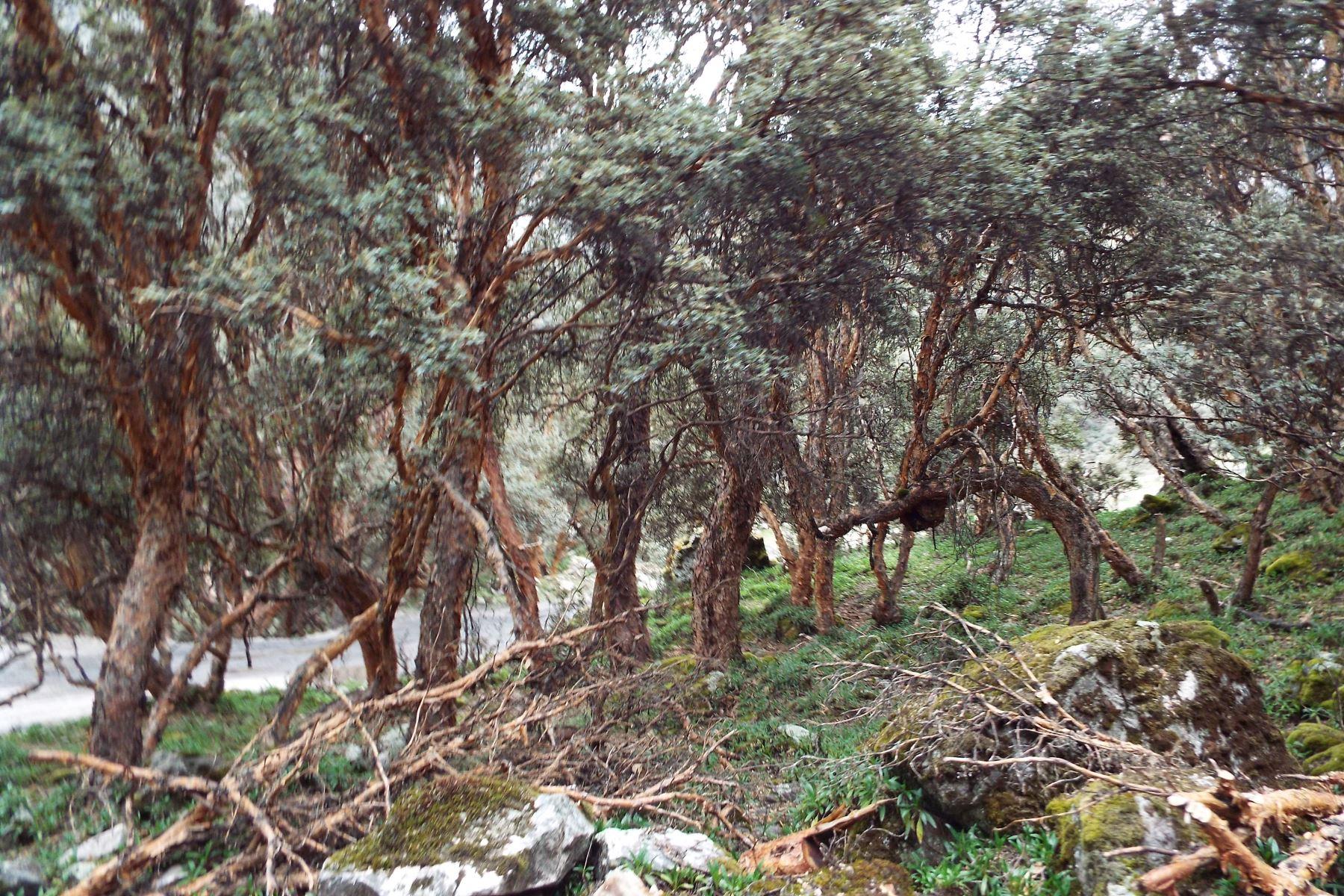 Bosques quenales. Foto: Difusión.