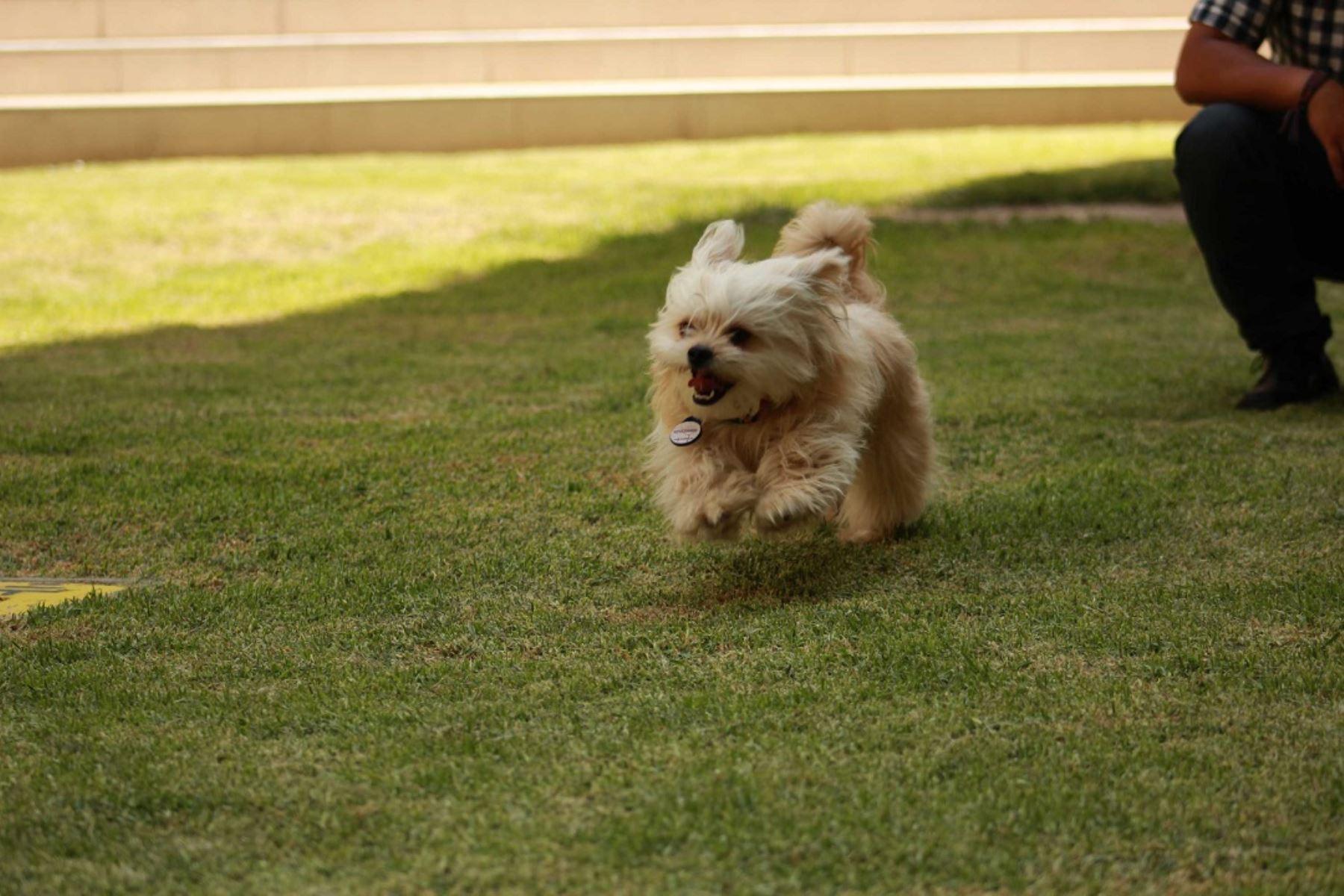 """Alumnos de la Universidad Católica San Pablo de Arequipa lanzaron """"K'antiy"""", marca de accesorios inteligentes creada para ayudar a reducir la pérdida de mascotas y encontrarlas de manera rápida para mejorar sus condiciones de vida."""