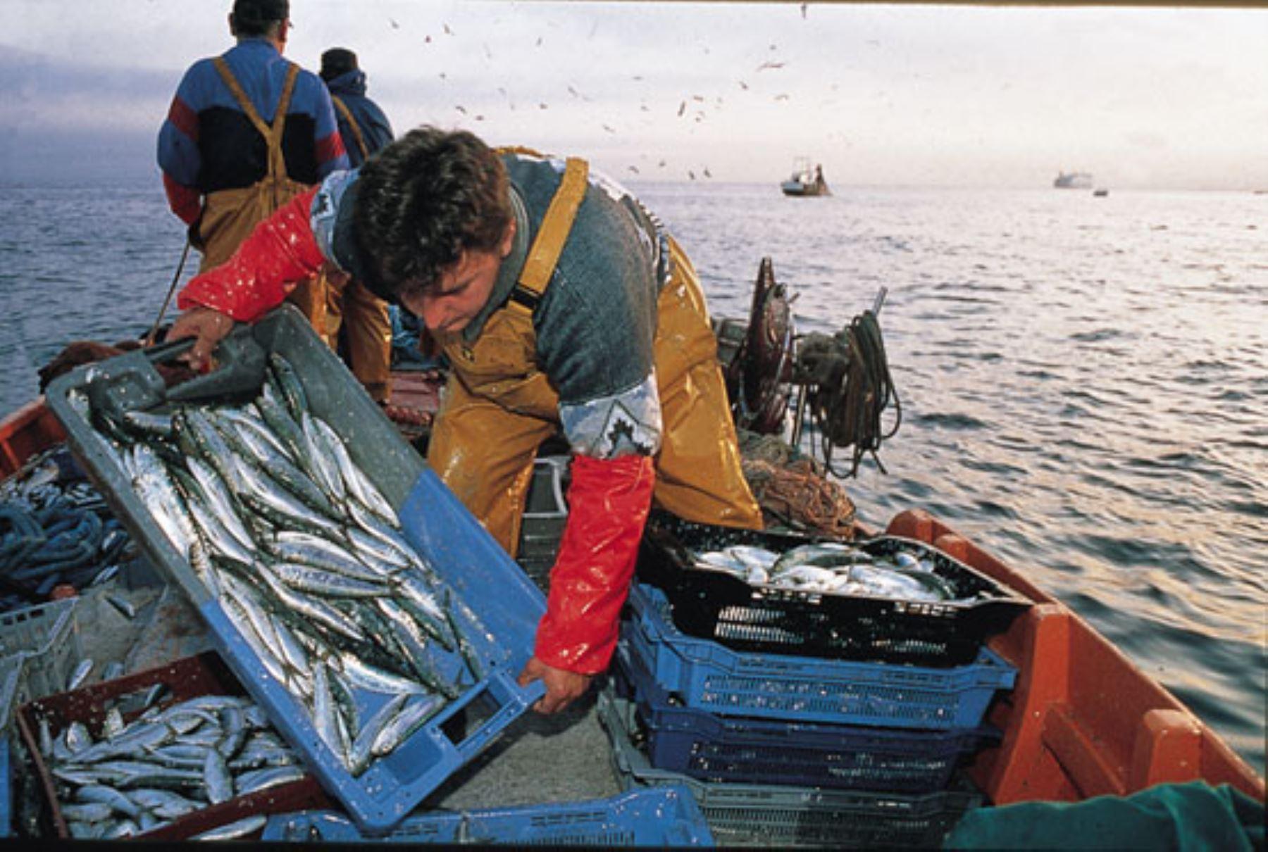 Pescadores artesanales. ANDINA/Difusión