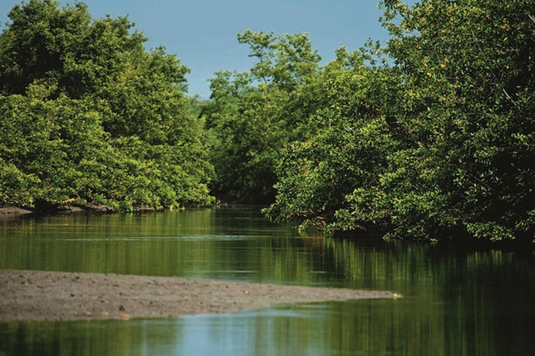 Perú y Ecuador vienen trabajando conjuntamente para el establecimiento de una reserva de biósfera binacional, la primera en Sudamérica, iniciativa impulsada por el Servicio Nacional de Áreas Naturales Protegidas por el Estado (Sernanp) y el Ministerio del Ambiente del vecino país.