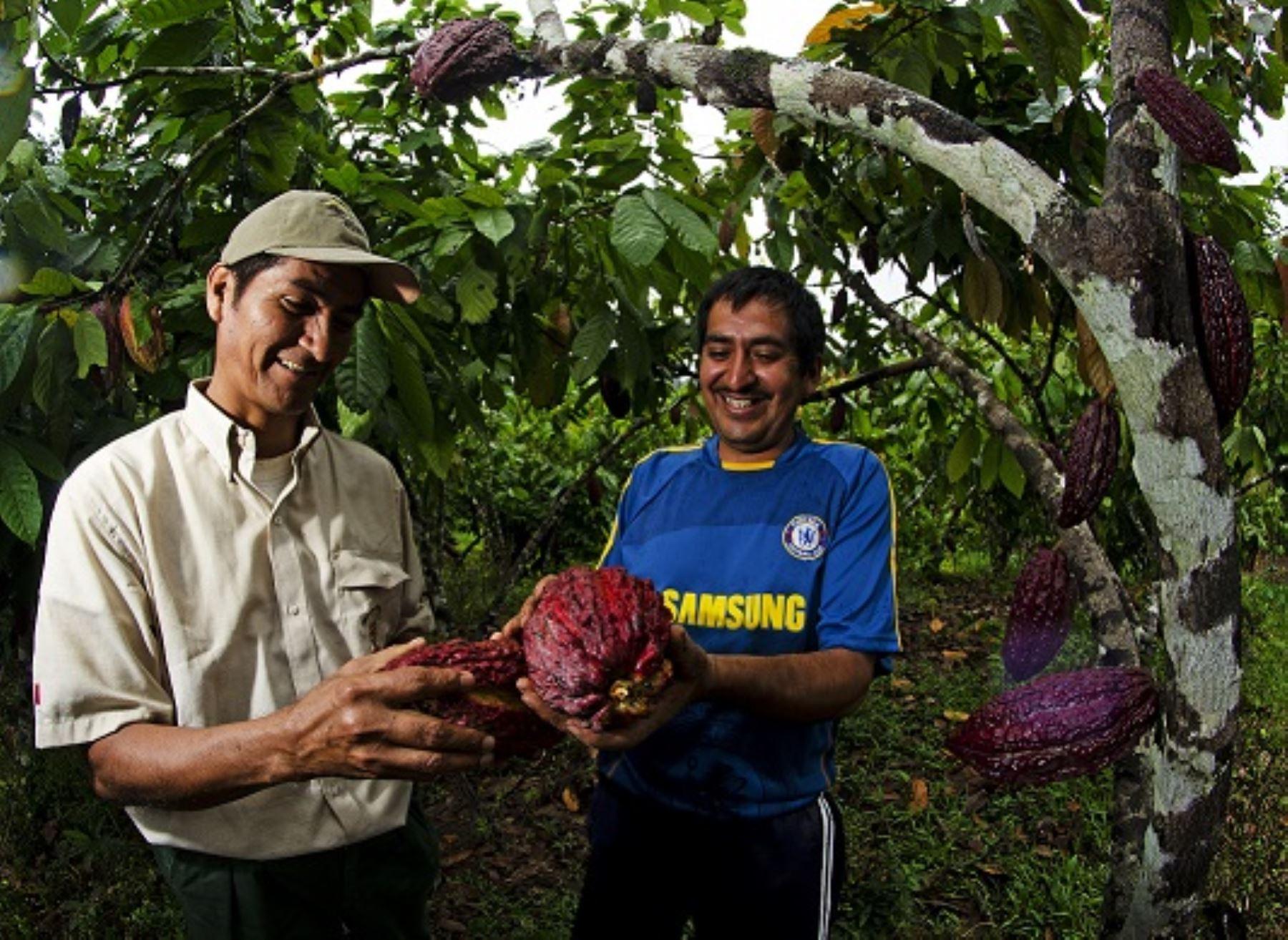 Desde hoy el Perú cuenta con una quinta reserva de biosfera. Se trata del Gran Pajatén, espacio natural que se encuentra ubicado en el nororiente peruano y que se extiende entre los departamentos de Amazonas, La Libertad y San Martín, anunció el Ministerio del Ambiente.