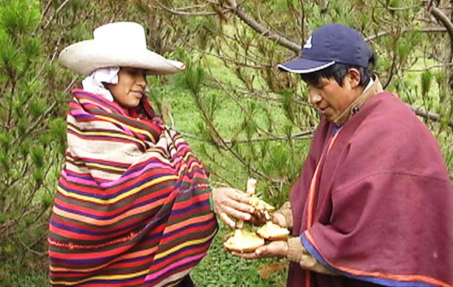 Incahuasi, en Lambayeque, destaca por su producción de hongos comestibles. ANDINA/archivo