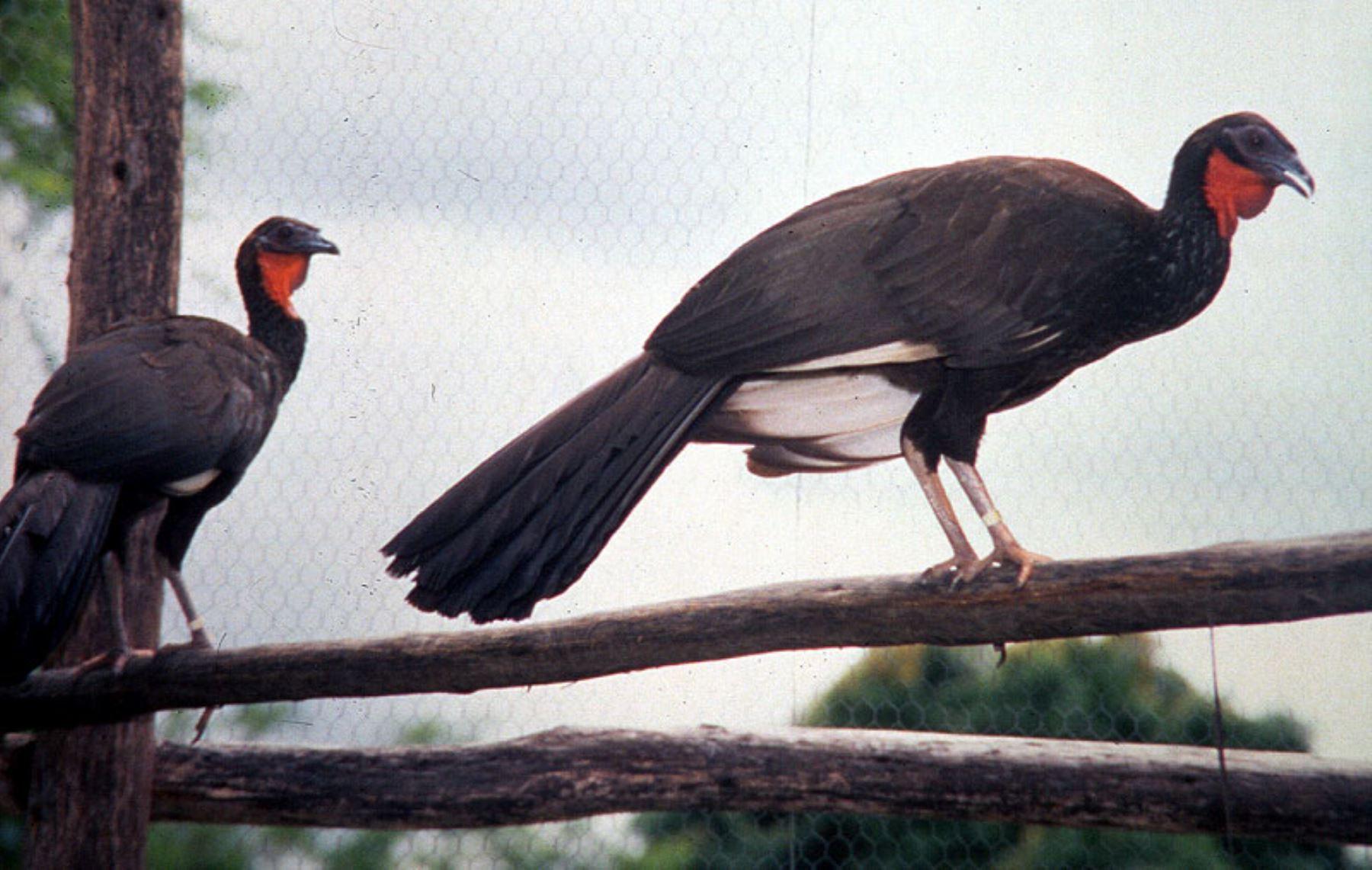 Las 10 aves emblemáticas de Perú que debes conocer | Noticias ...