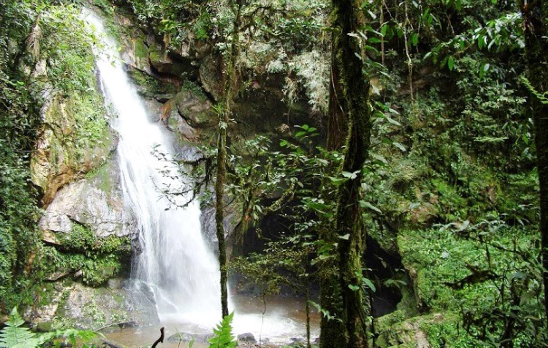 Bosque de Protección Alto Mayo. ANDINA/Difusión