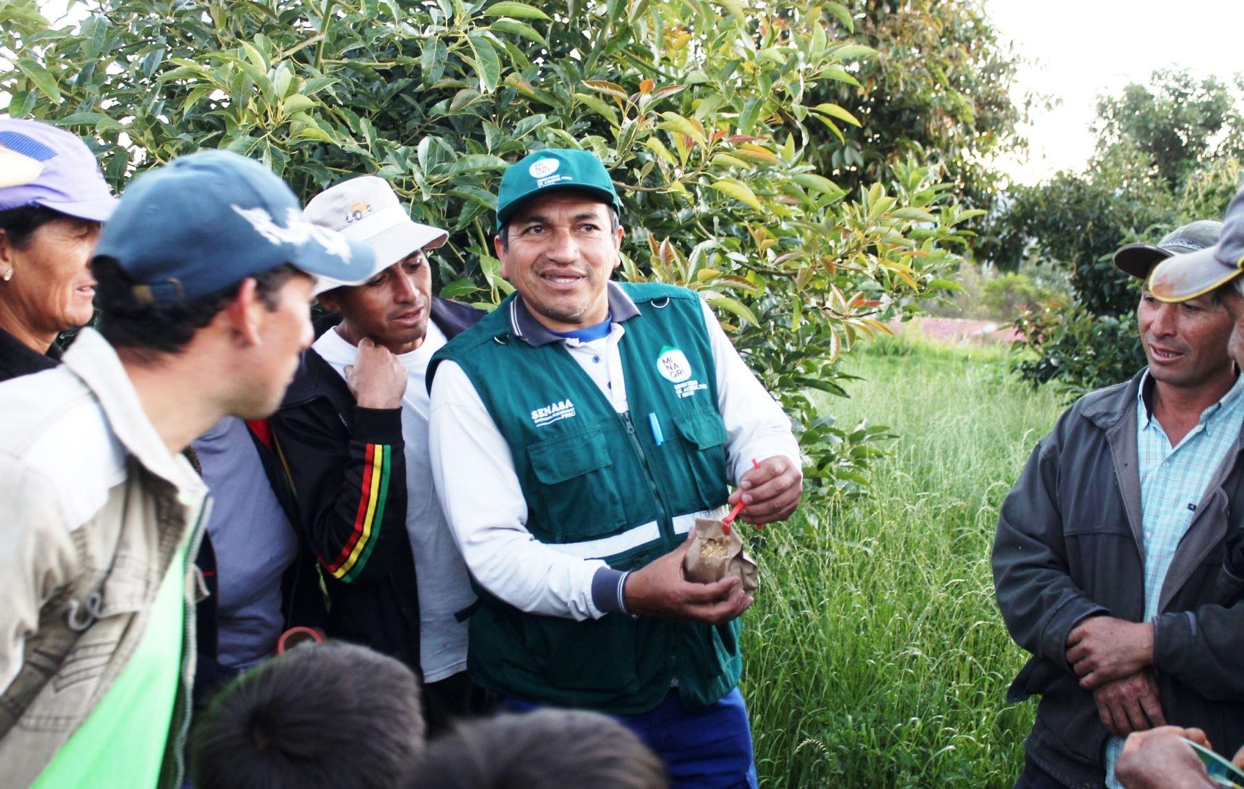 Senasa promueve uso de controladores biológicos para combatir presencia de plagas en Cajamarca. ANDINA