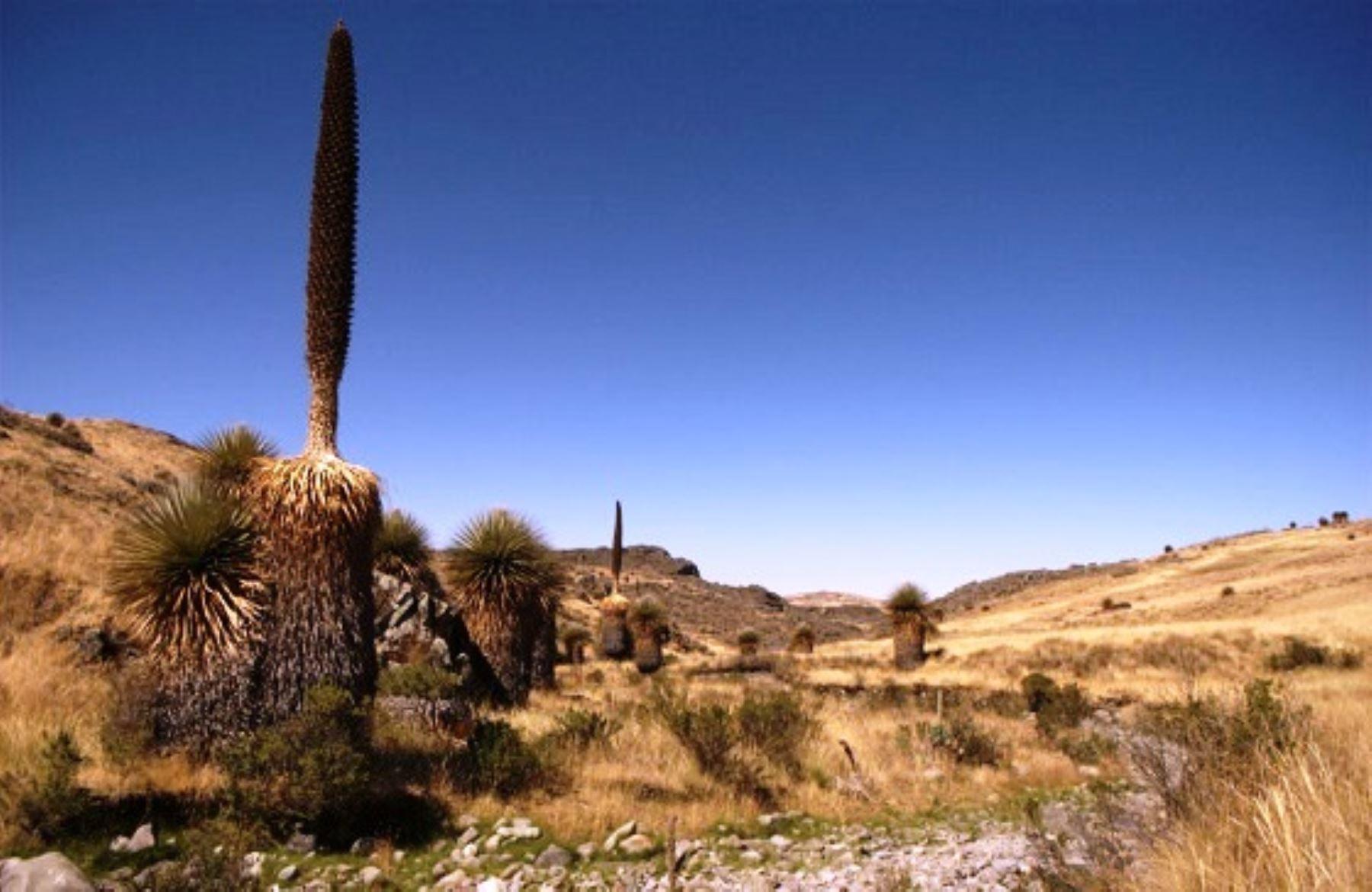 Promoverán el desarrollo turístico del Santuario y Reserva Nacional Calipuy, en La Libertad.