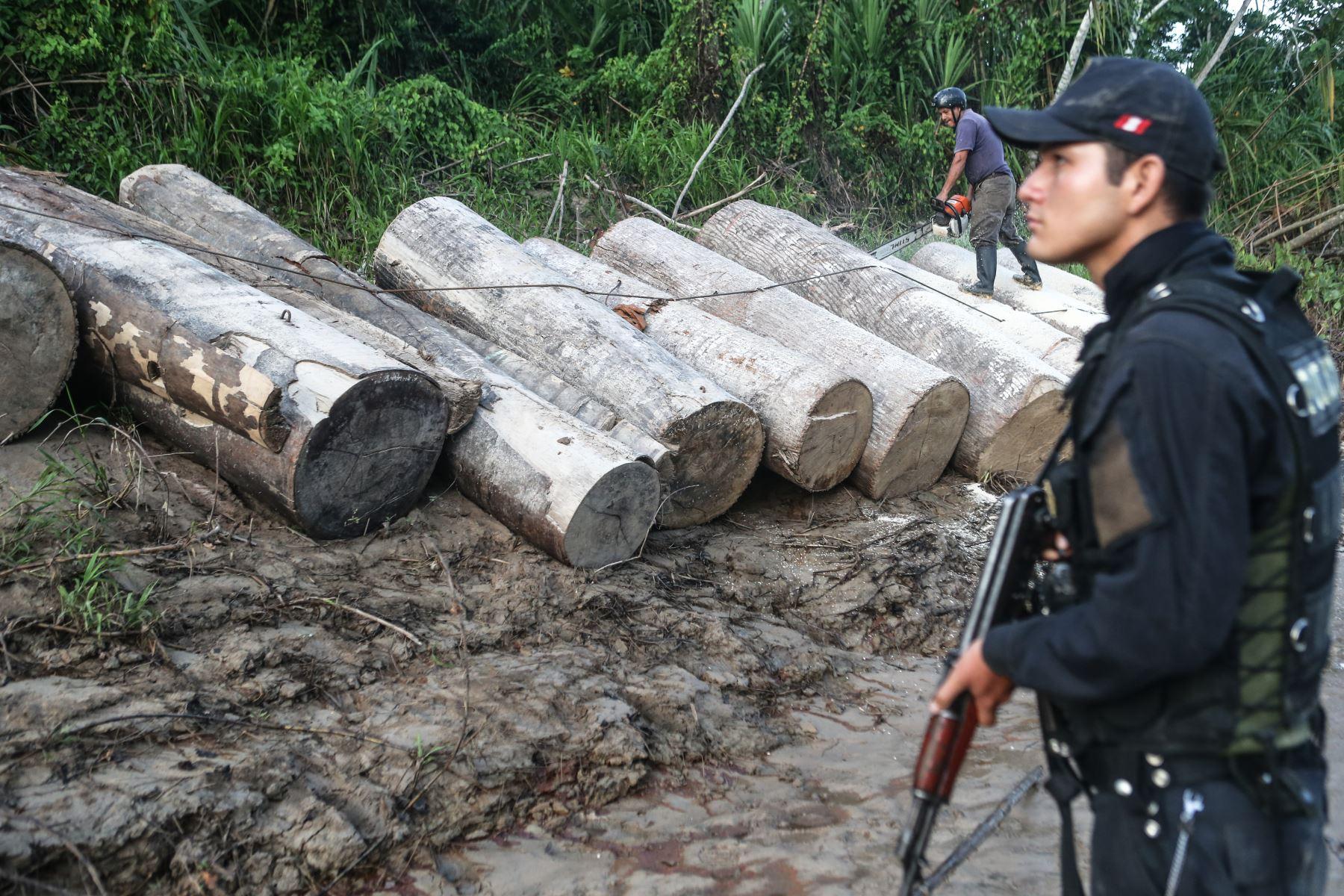 Gobierno impulsa acción multisectorial para prevenir y enfrentar delitos ambientales como la tala ilegal, resaltó el Minam. ANDINA/archivo