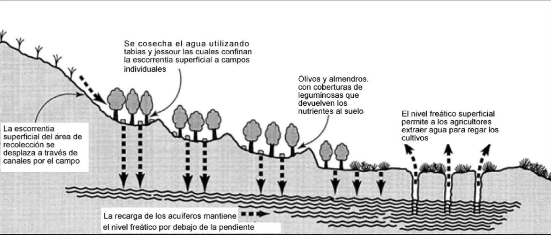 Sepa Qué Es La Siembra Y Cosecha De Agua Y Sus Beneficios