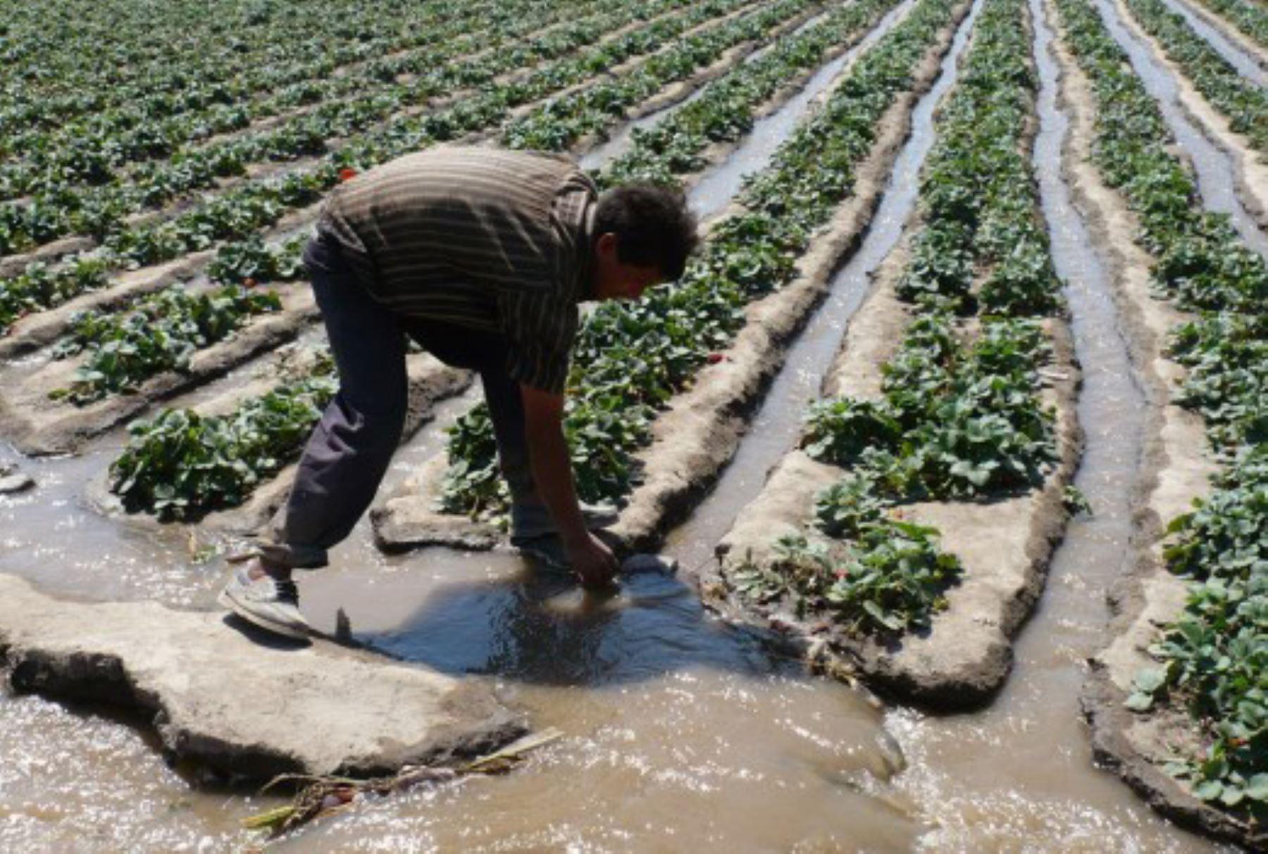 """Una de las estrategias que está permitiendo al Perú enfrentar con buenos resultados el impacto del cambio climático y la escasa disponibilidad de agua para la agricultura y el consumo humano, es la """"siembra y cosecha de agua"""", una de las máximas expresiones de la cultura hídrica andina ancestral que permitió garantizar la sostenibilidad agrícola."""