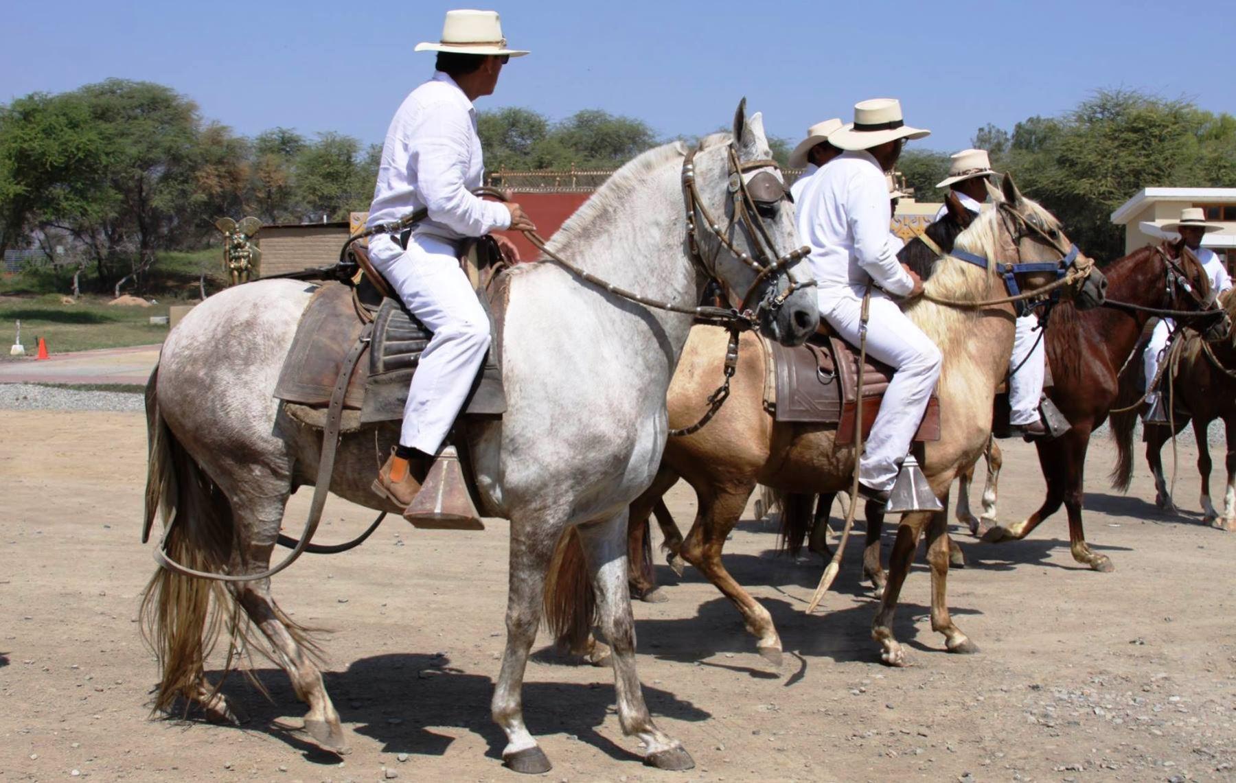 Habrá exhibición de caballos de paso peruano por el aniversario del descubrimiento del Señor de Sipán, en Lambayeque. ANDINA