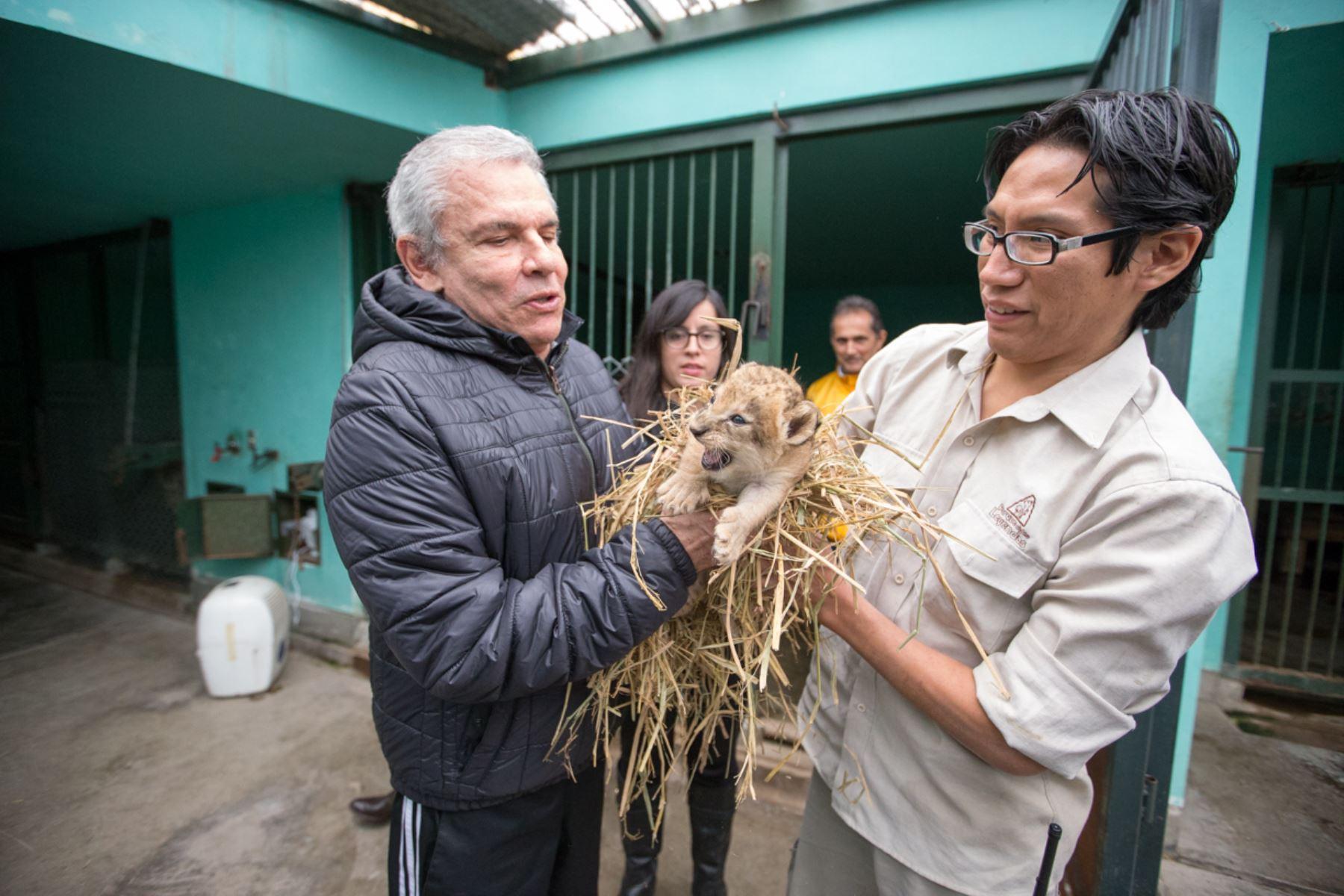 Chiclayanita, es la nueva inquilina en el Parque de las Leyendas. Foto: Andina/Difusión