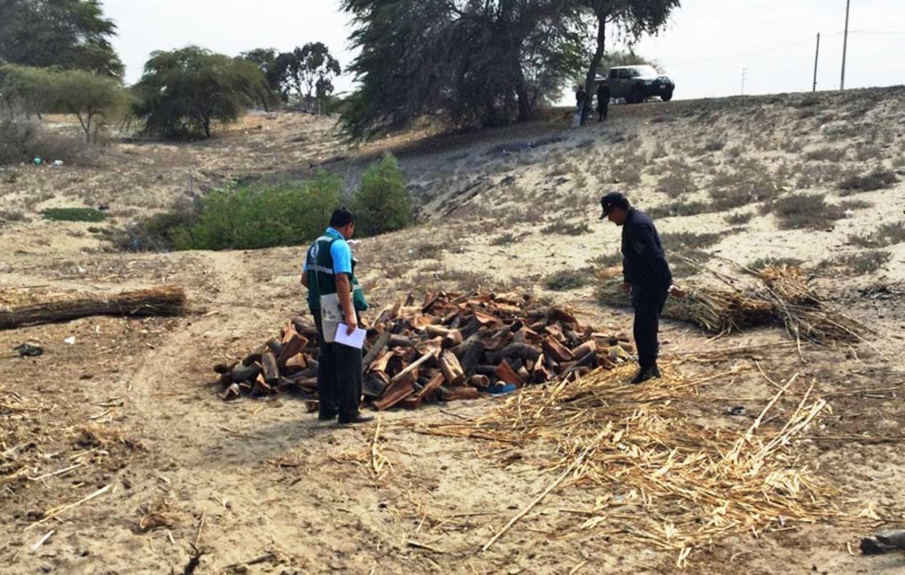Evalúan nuevas estrategias para frenar la deforestación de bosques secos en Piura. ANDINA