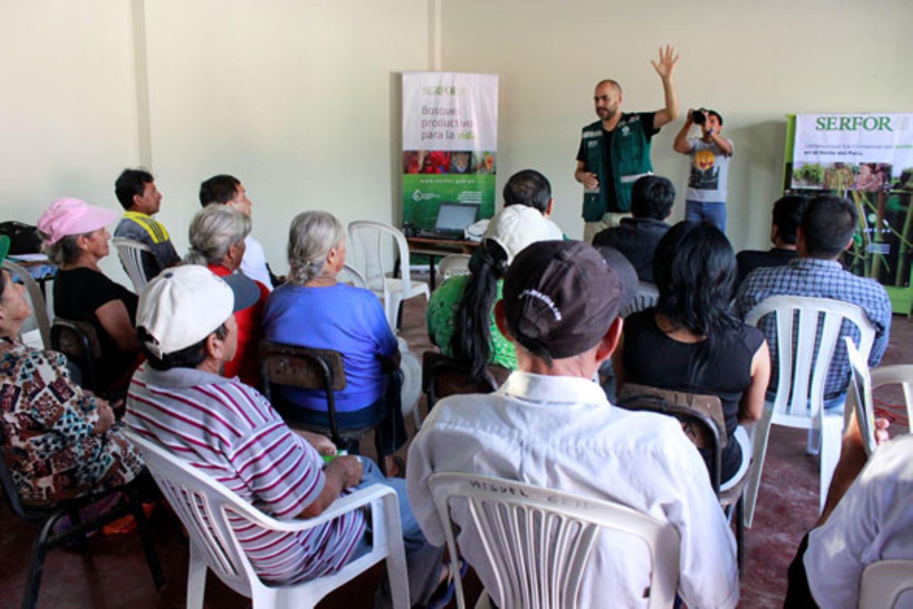 Buscan impulsar cadena productiva del bambú en región Lambayeque. ANDINA