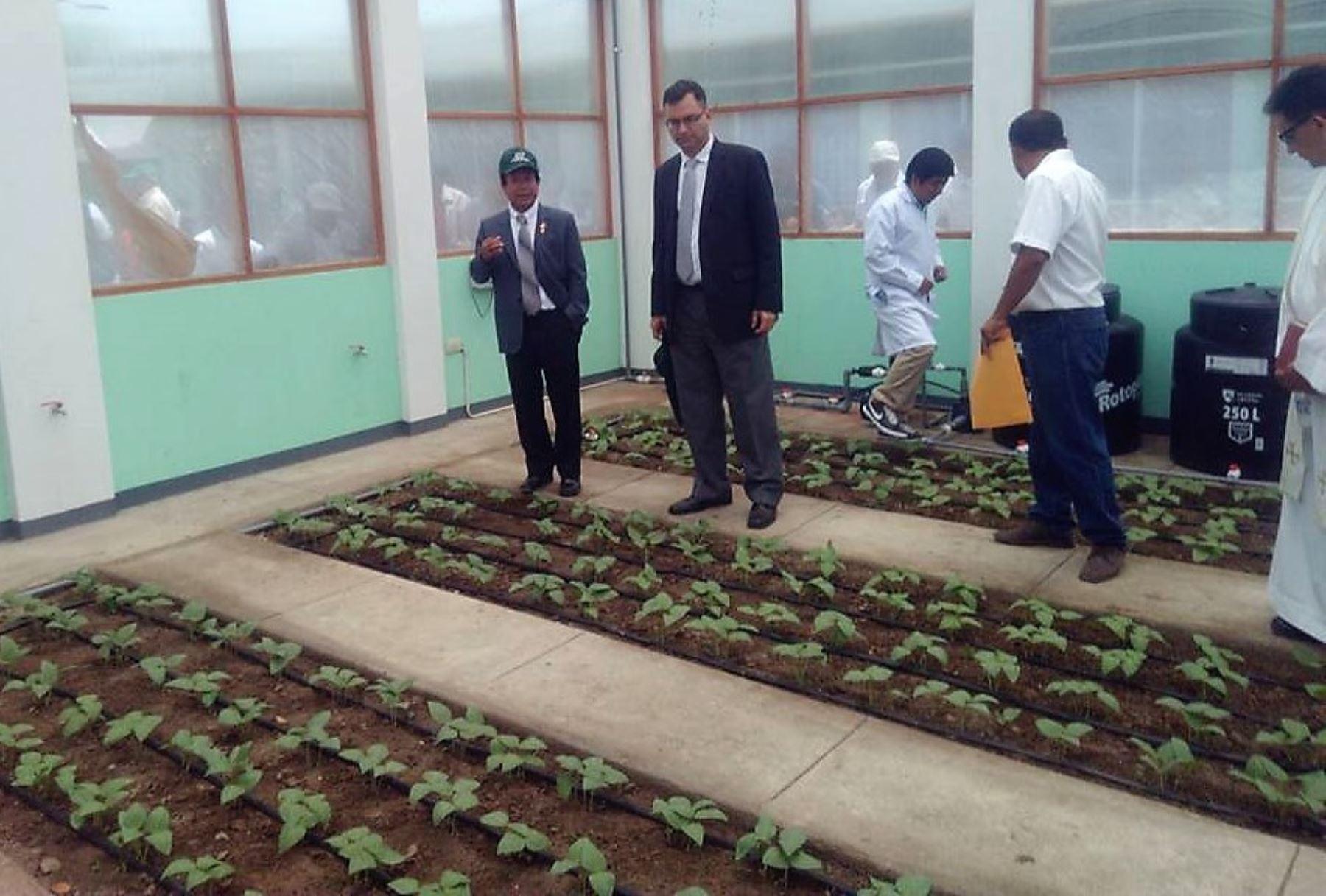 Inauguran nueva planta procesadora de semilla en región Lambayeque. ANDINA