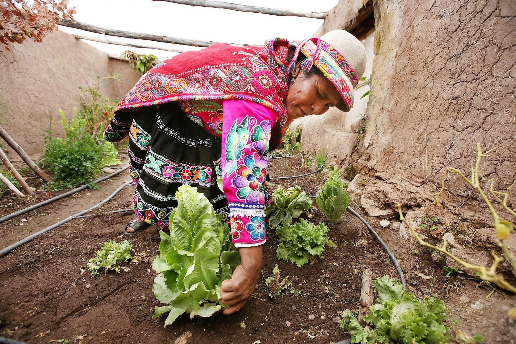 Comunidades campesinas de Arequipa se adaptarán al cambio climático. ANDINA/Archivo