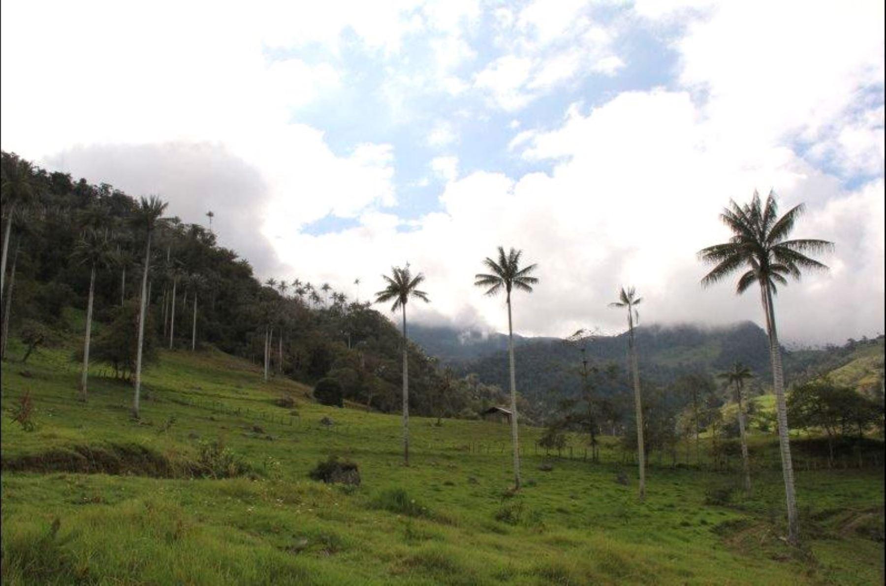 El Parque Nacional de Cutervo, ubicada en la región Cajamarca, es la primera área natural protegida por el Estado peruano y alberga una gran biodiversidad. ANDINA/Difusión