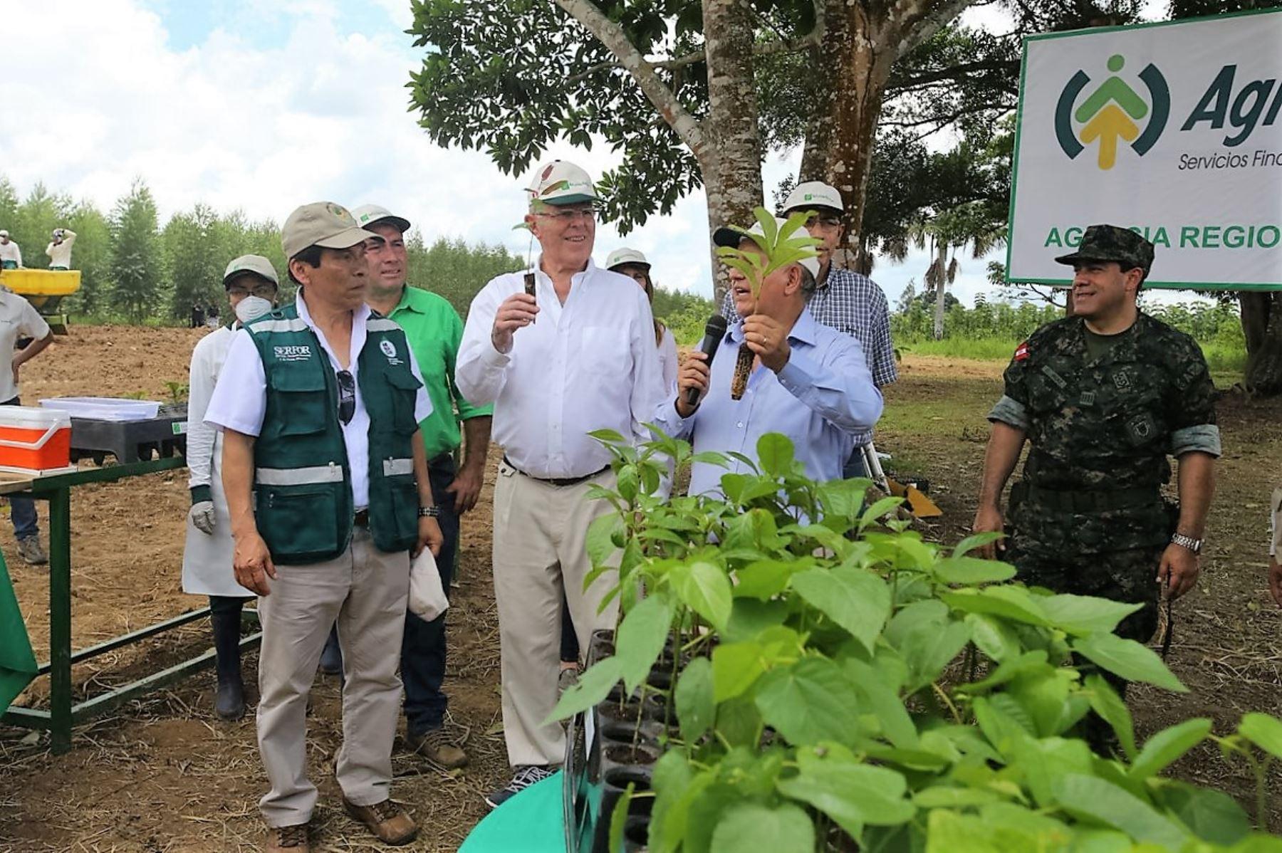 Presidente visitó el km. 40 de la carretera Federico Basadre, en Ucayali, para poner en marcha el Programa Nacional de Plantaciones Forestales.