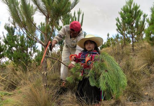 ANDINALa meta al 2021 es lograr un país con conciencia ambiental. ANDINA