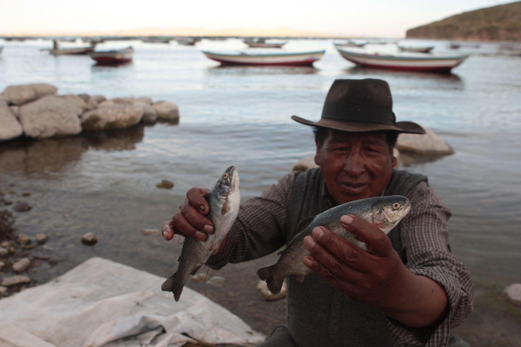 Impulsan desarrollo de acuicultura, pesquería y evaluación de recursos del lago Titicaca. ANDINA/archivo