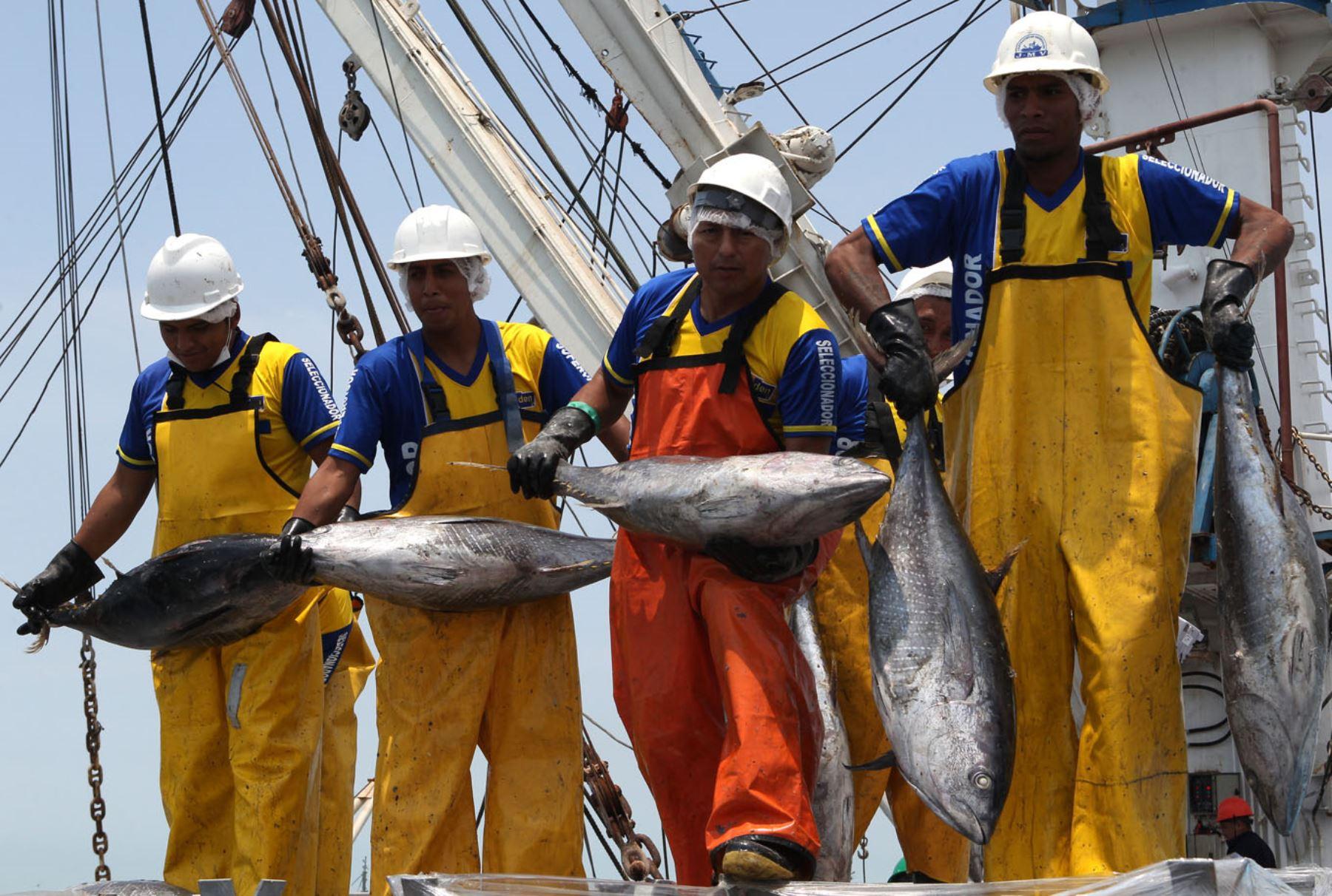 Pesca de atún en el mar peruano. ANDINA/Héctor Vinces