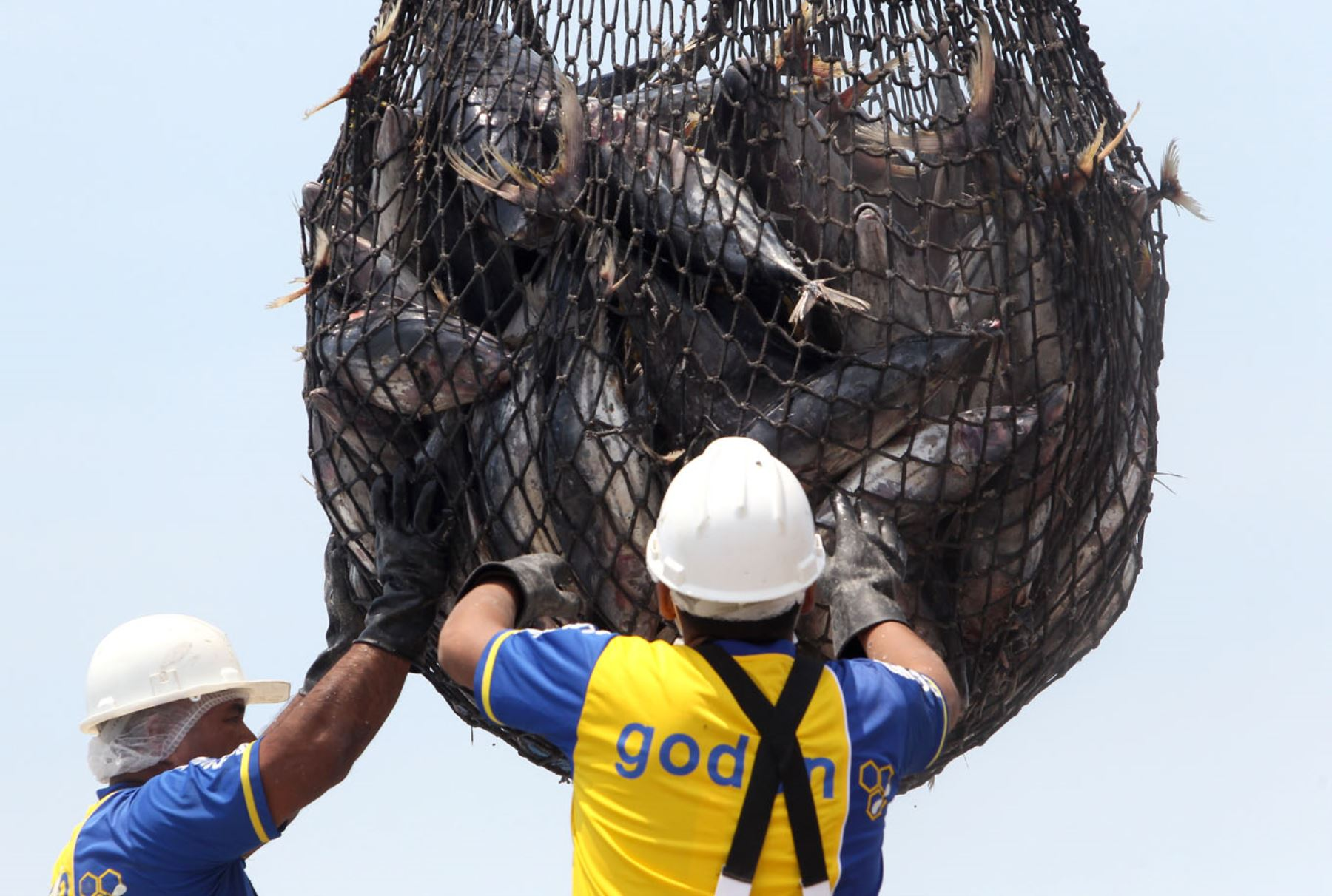 Pesca de atún. ANDINA/Héctor Vinces
