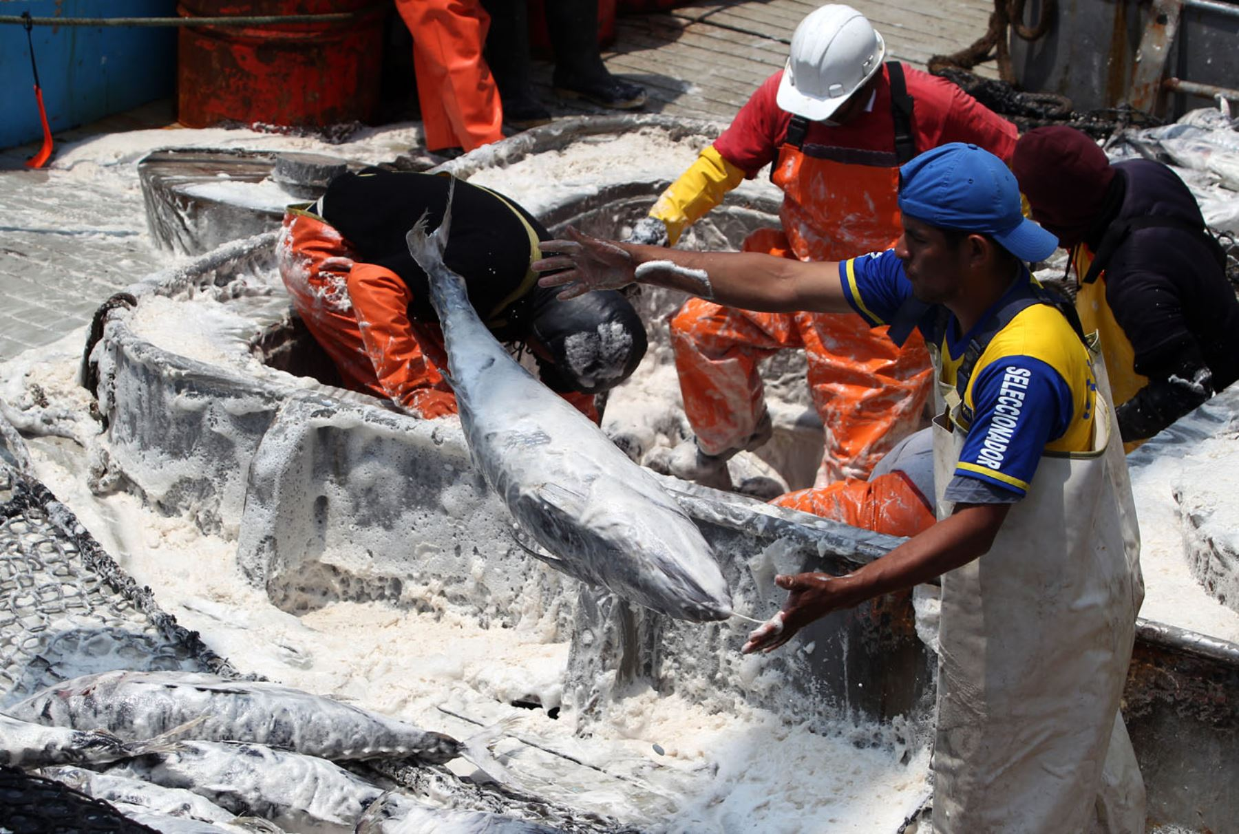 LIMA,PERÚ-ENERO 10.Ministro Bruno Giuffra,inspecciona primer desembarque de pesca de Atún capturado en mar peruano en Frontera con Chile.Foto:ANDINA/Héctor Vinces.