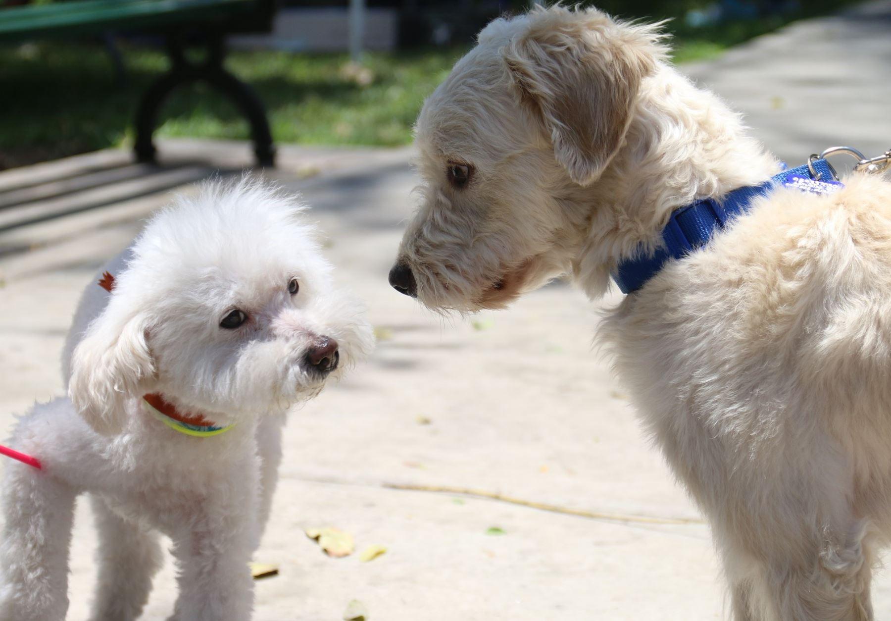 Mascotas ya no estarán desprotegidas en Miraflores. Foto:  ANDINA/Difusión