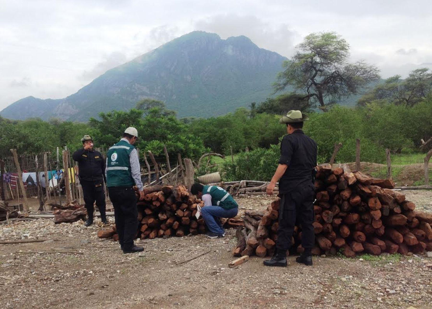 Incautan en Piura madera de especie forestal en peligro.