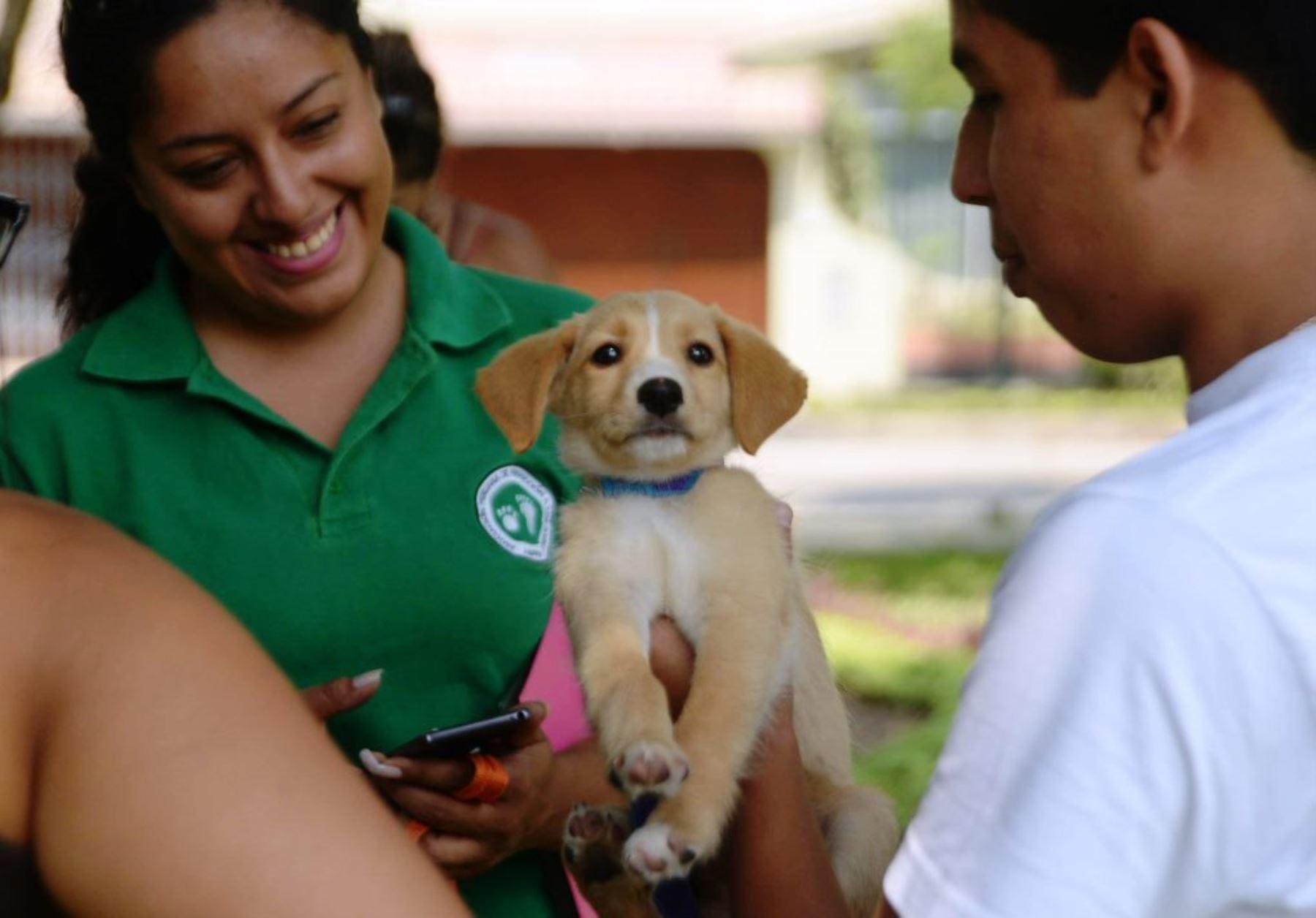 Perrita que salvó de huaico en Chosica fue adoptada por familia de Surco. Foto: ANDINA/Difusión.