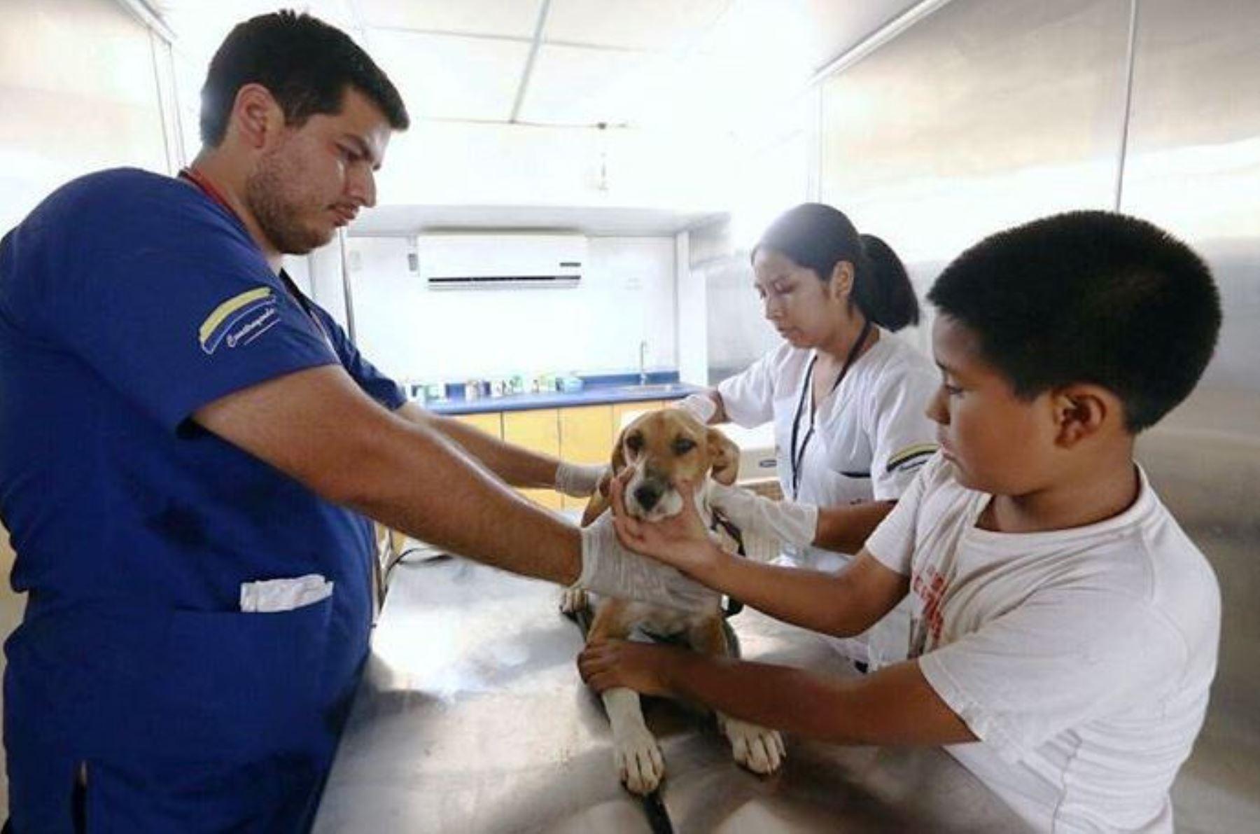 Brindan atención veterinaria a mascotas afectadas por emergencias en Carapongo. Foto: ANDINA/Difusión.