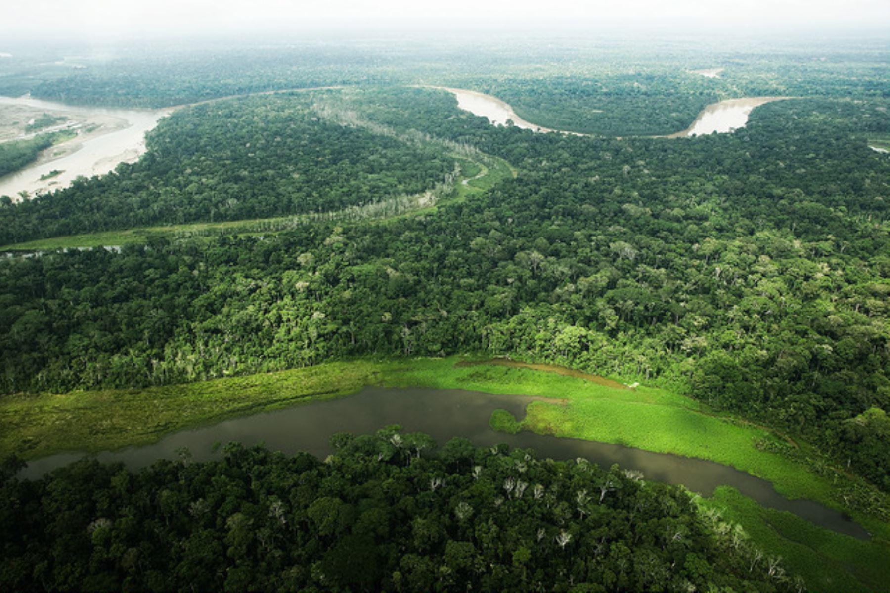 Vista de la Amazonía peruana. Cortesía