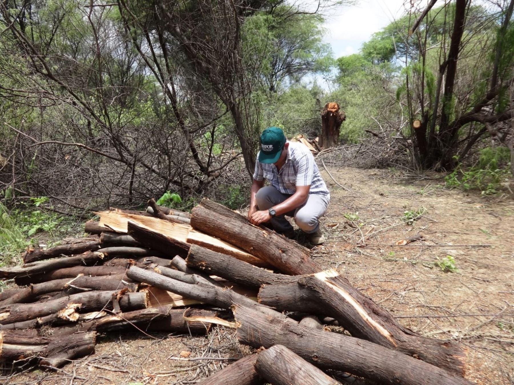 Con video educativo buscan hacer reflexionar sobre peligros de la deforestación. Cortesía