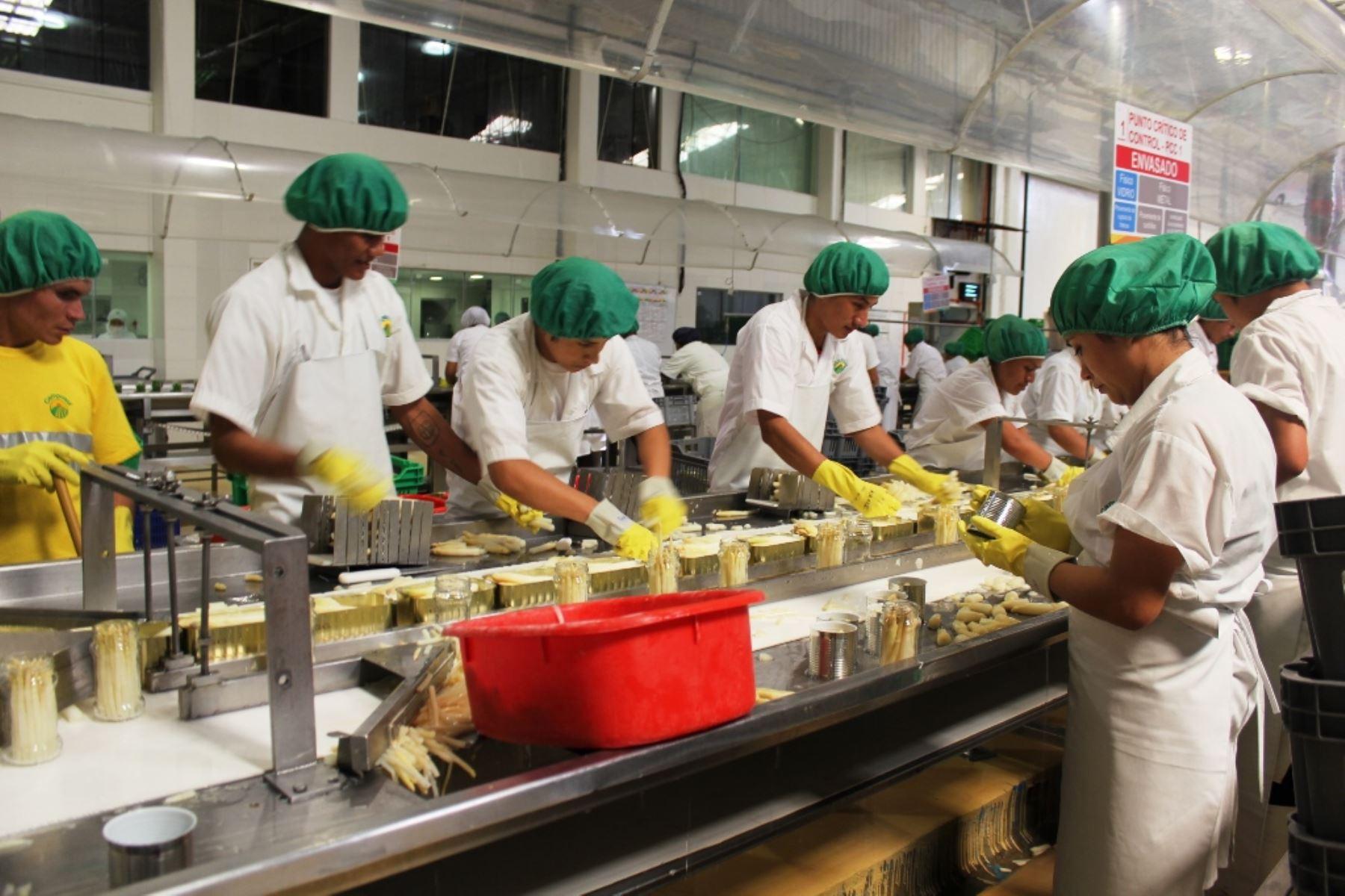 Trabajadores de empresa agroexportadora peruana Foto:  ANDINA.