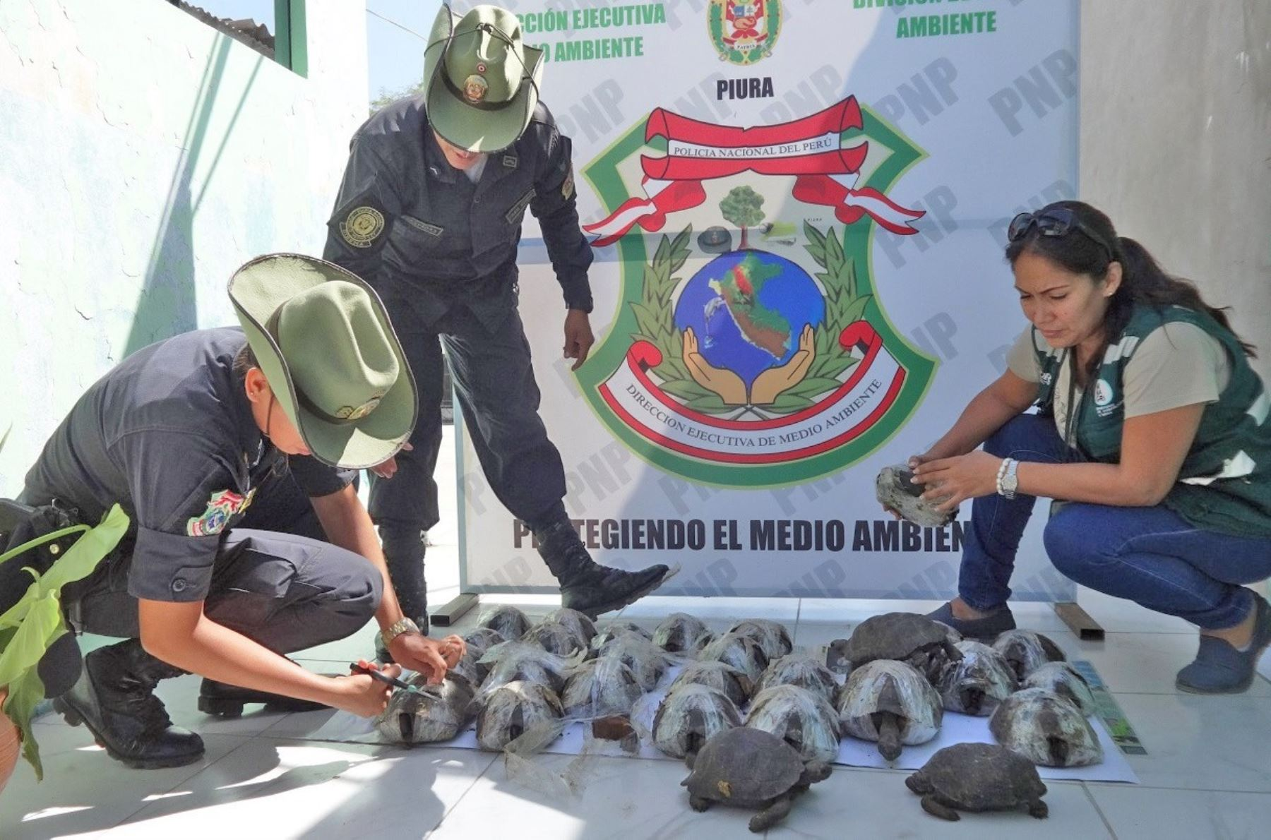 Rescatan 29 tortugas galápagos en peligro de extinción procedentes de Ecuador. ANDINA