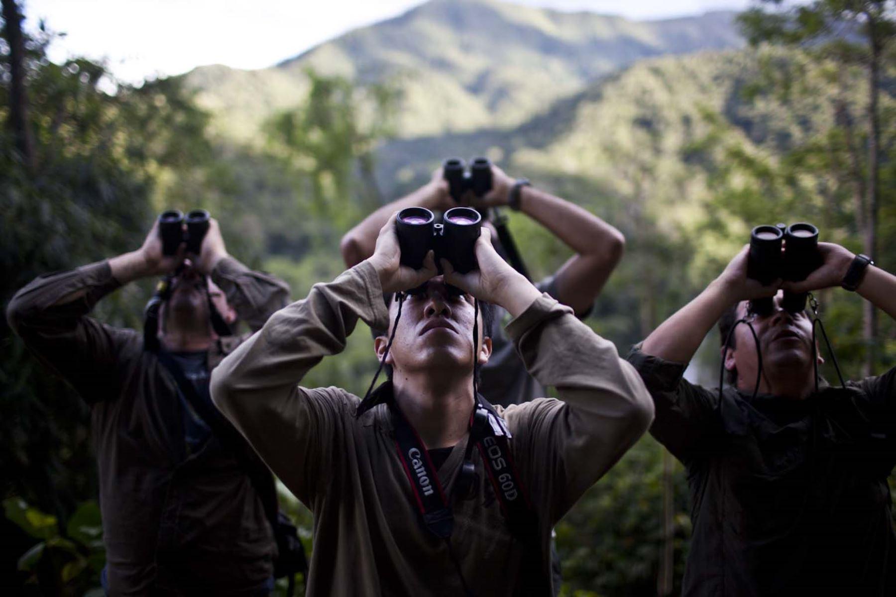 Perú irá en busca del primer lugar en el concurso de observación de aves Global Big Day 2018.