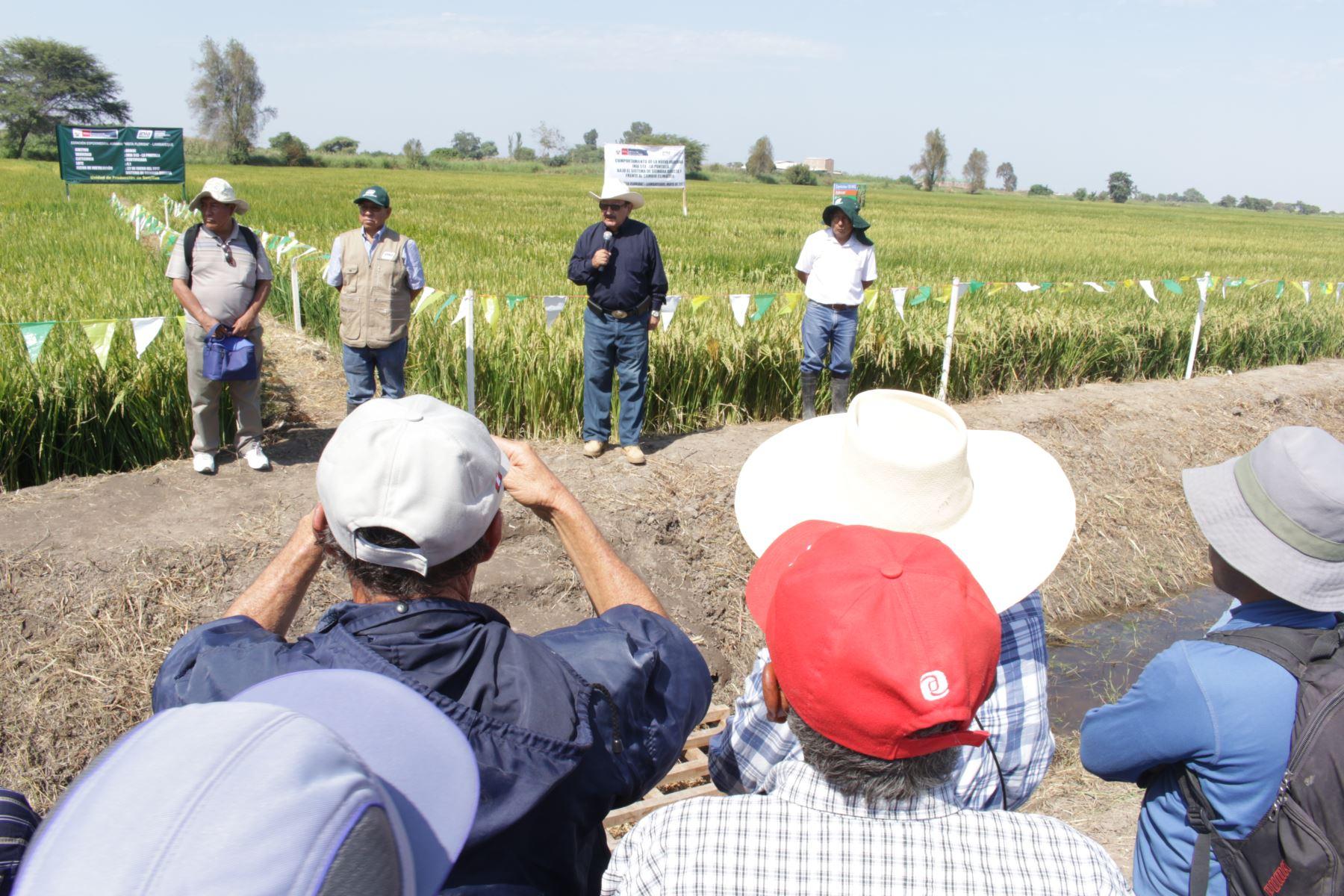 INIA capacita a más de 400 productores de arroz de Lambayeque y La Libertad. ANDINA