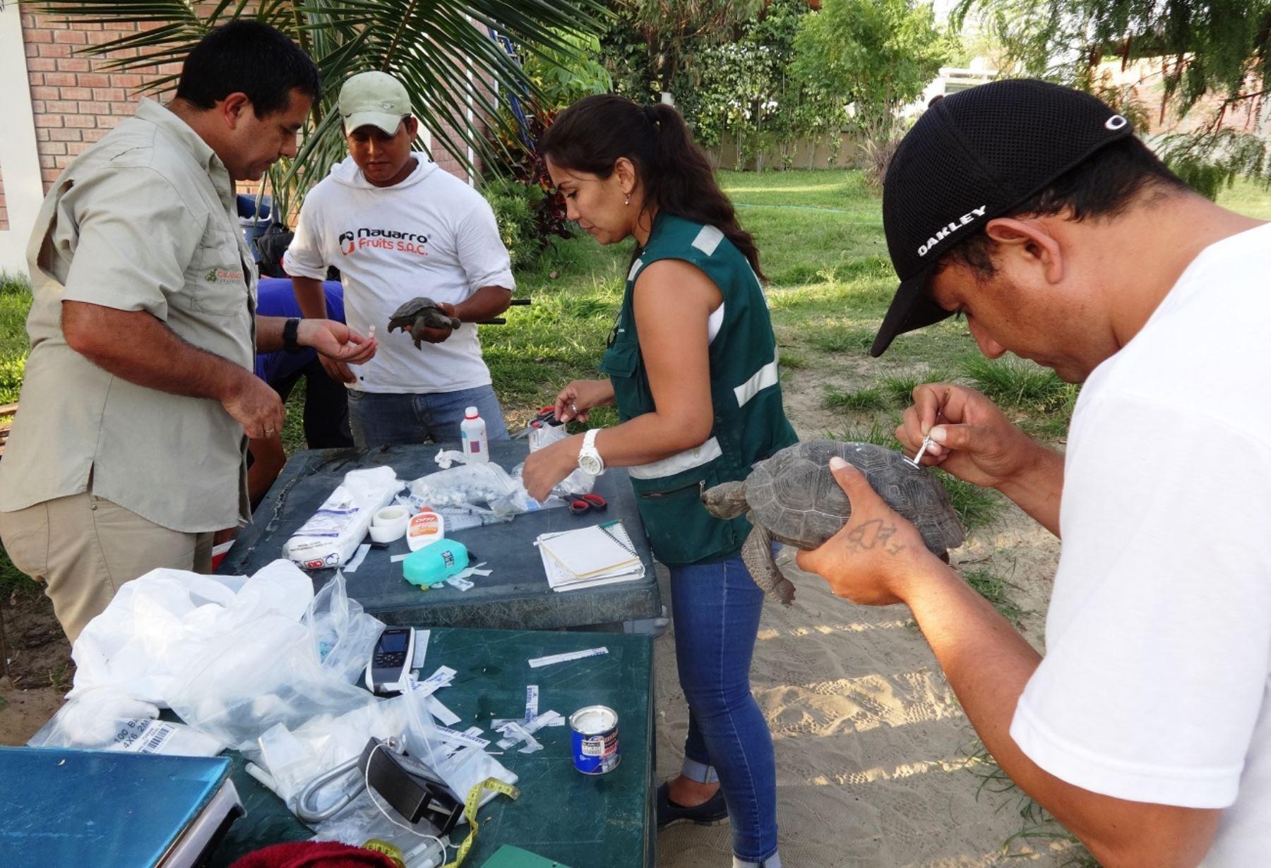 Perú y Ecuador coordinan repatriación de tortugas galápagos