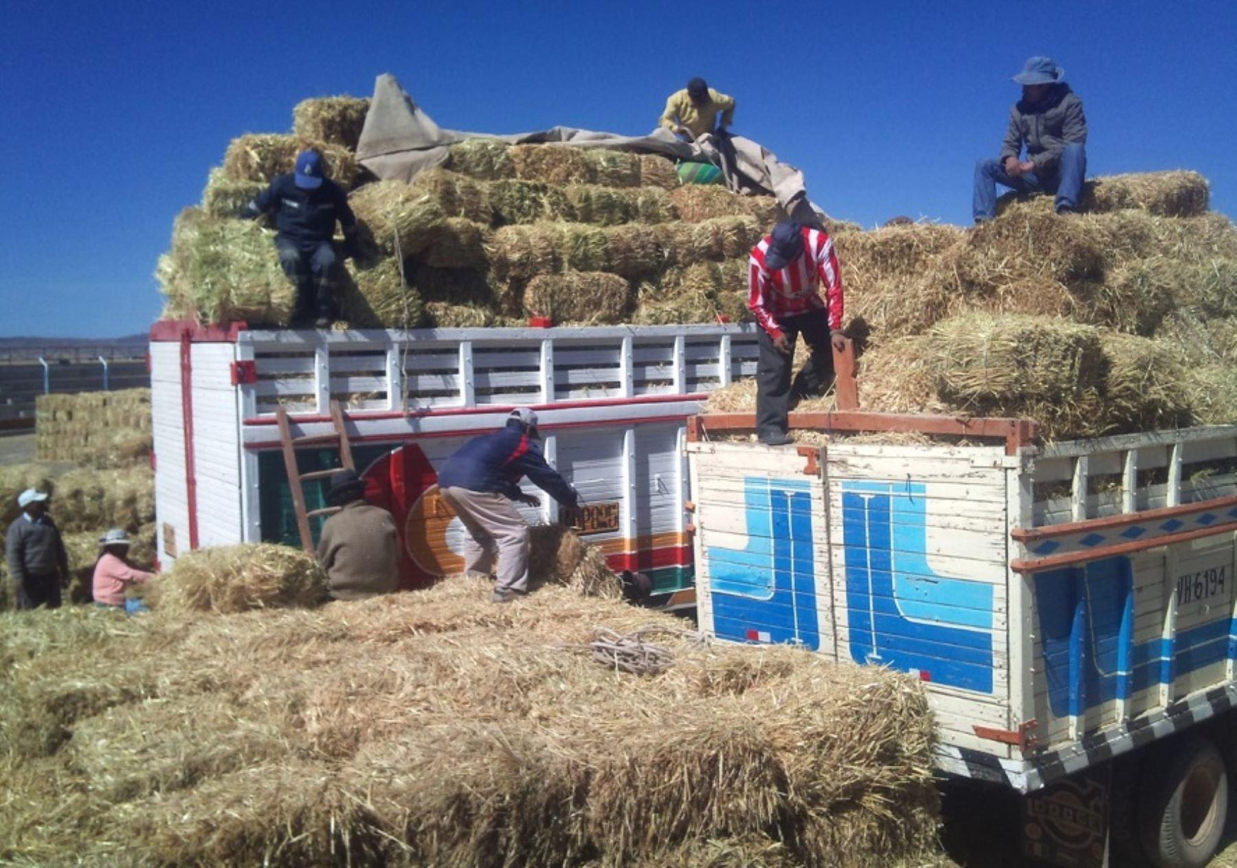 El Ministerio de Agricultura y Riego (Minagri) cuenta con más de 48,000 hectáreas de pastos cultivados para atender a más de 700,000 animales, que además recibirán antibióticos y otros productos veterinarios, como parte del Plan Multisectorial ante las Heladas y Friaje 2018, sostuvo hoy su titular Gustavo Mostajo. ANDINA/Difusión