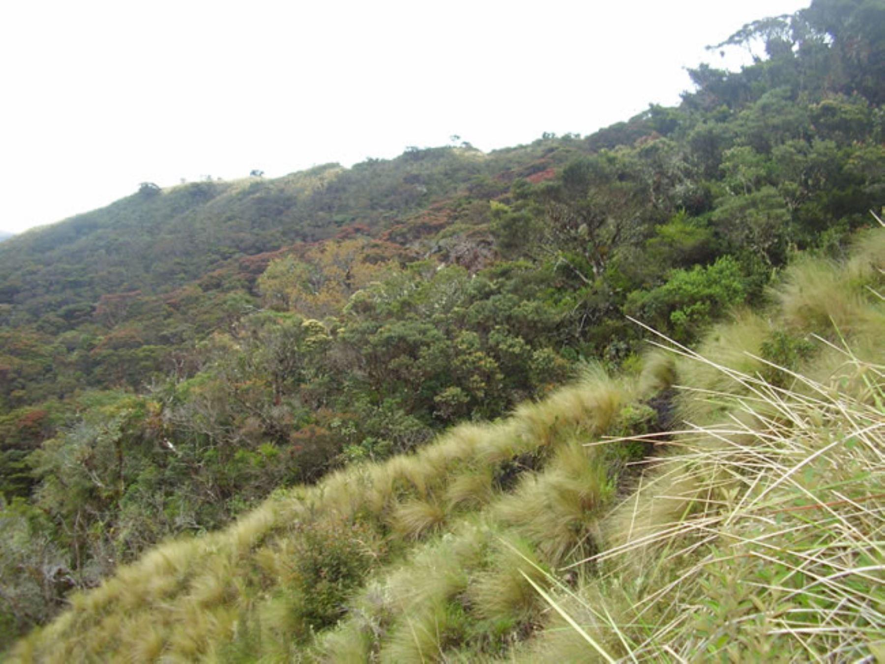 """Gobierno Regional de Amazonas impulsa creación de Área de Conservación Regional """"Bosques Tropicales Estacionalmente Secos del Marañón"""", para preservar una importante biodiversidad en esa región del oriente peruano."""