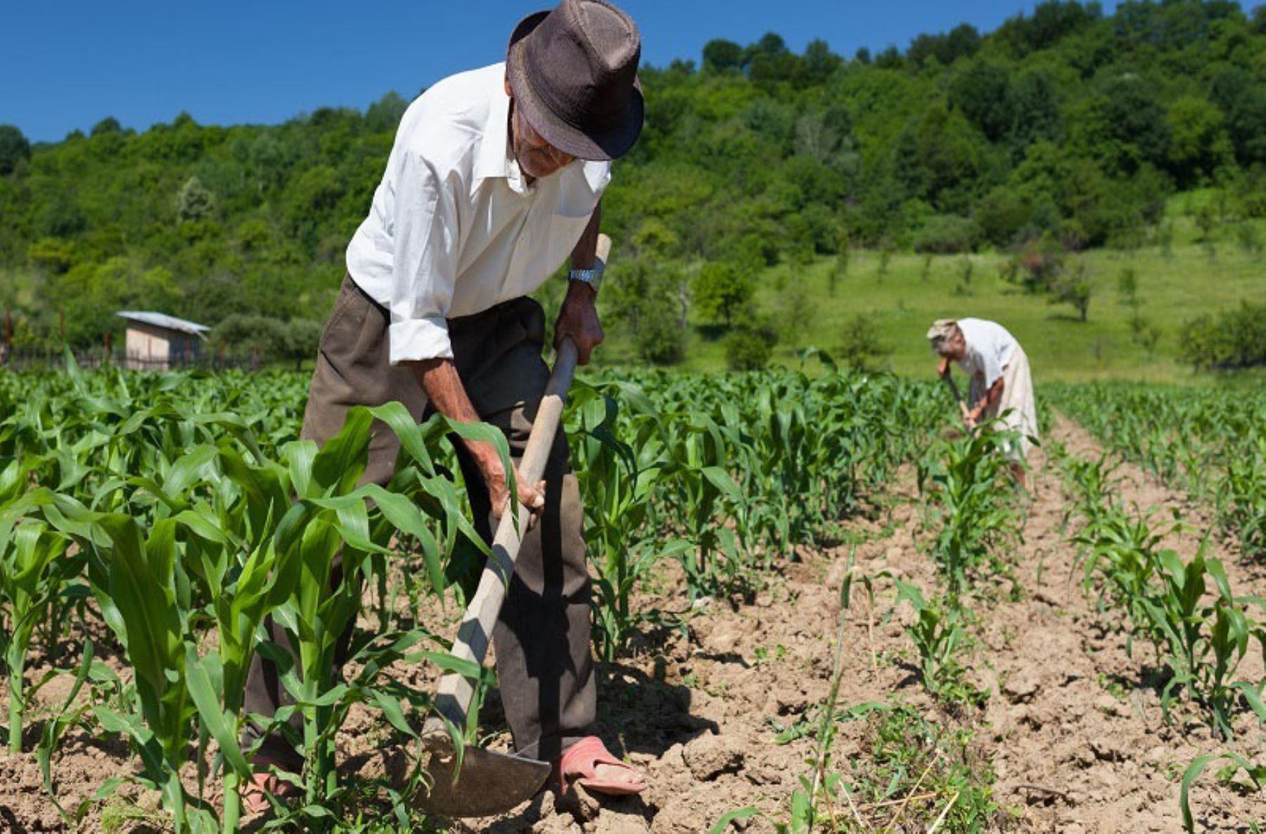 Agricultura peruana registra crecimiento permanente ANDINA/archivo