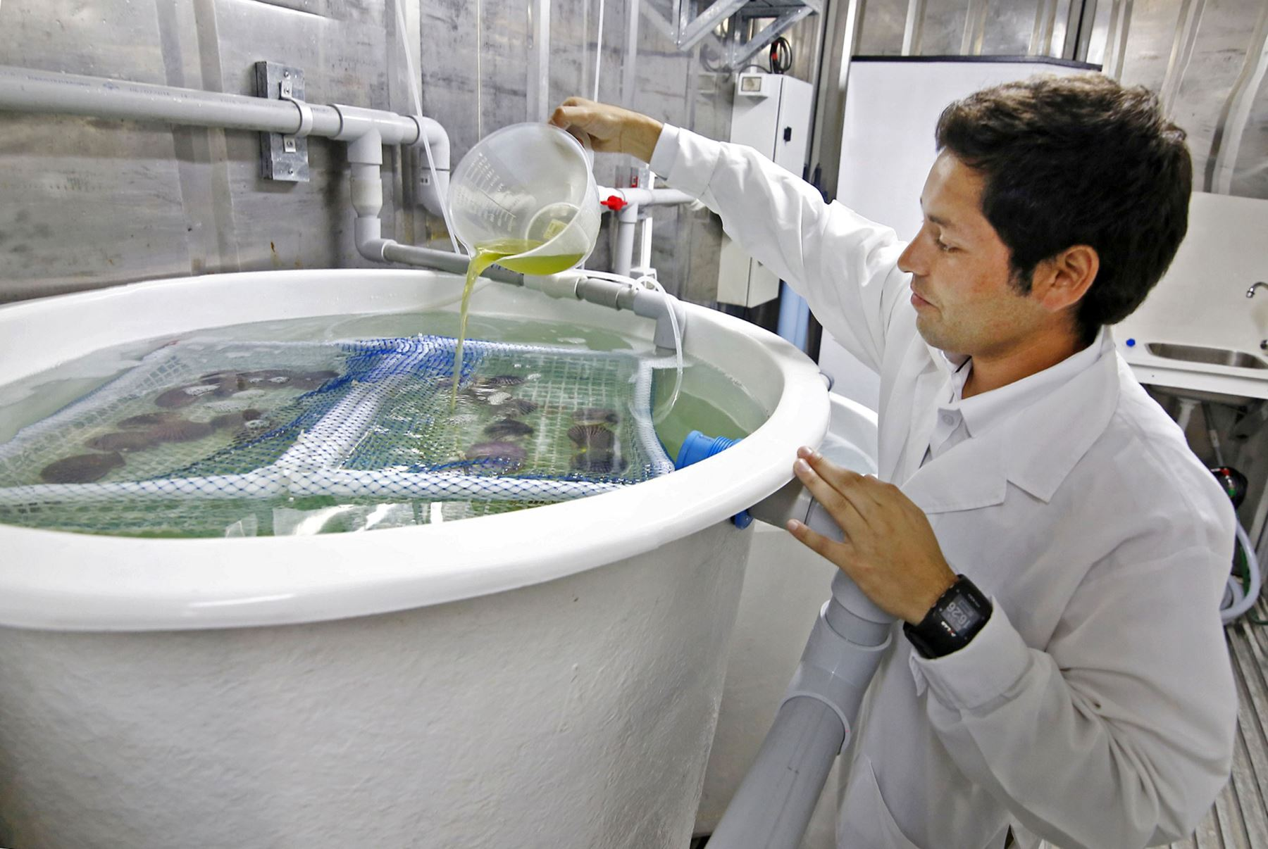 Investigación en Acuicultura. ANDINA/Difusión