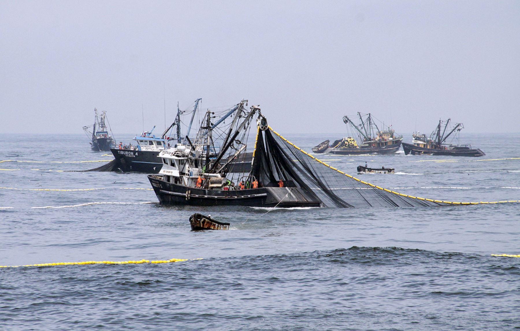 Pesca de anchoveta. ANDINA/Difusión
