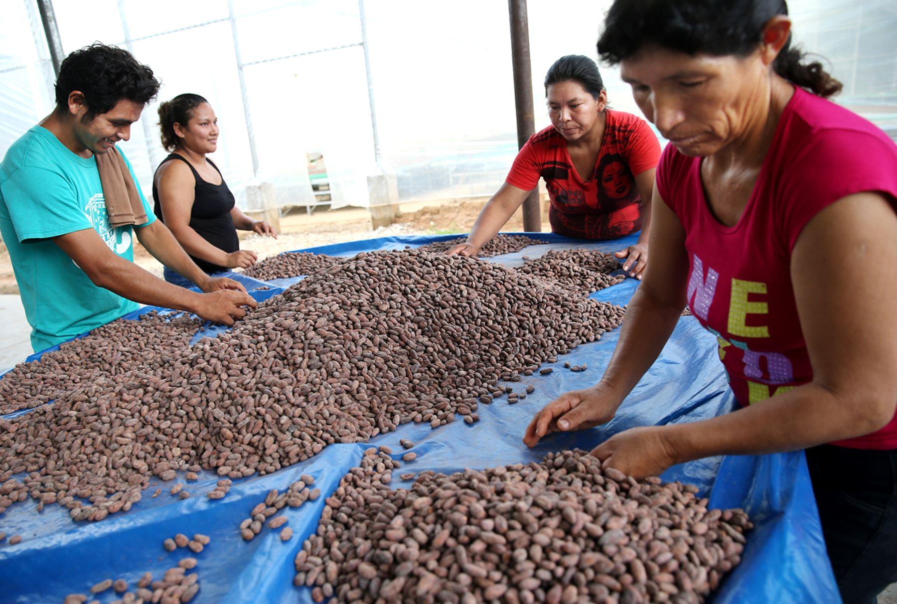 Ruta del Cacao 2017 Ucayali - Tingo Maria. Foto: ANDINA/Melina Mejía