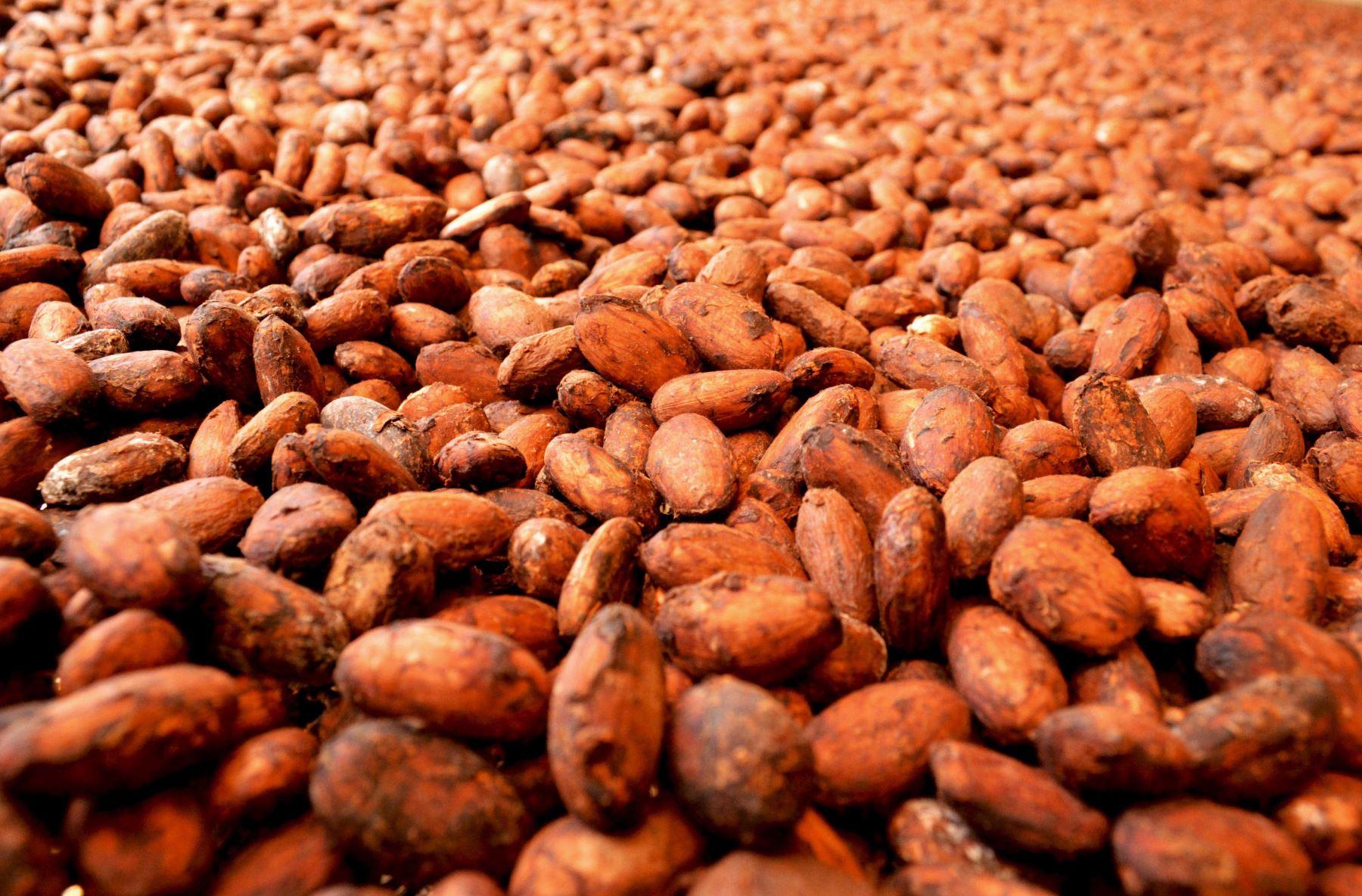 El cacao es otro de los cultivos bandera de la región Cusco. ANDINA/Difusión