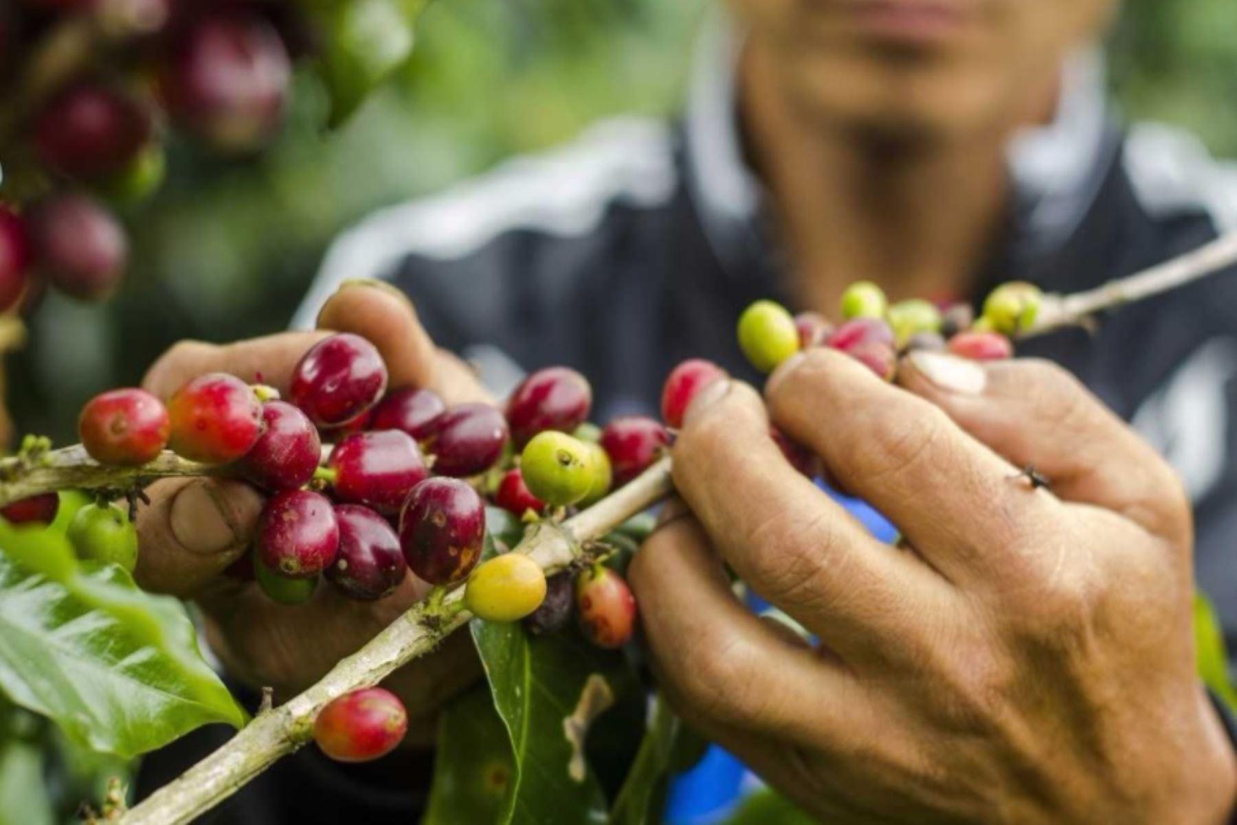 El camu camu es uno de los cultivos que mejorará su proceso de producción. ANDINA/Difusión